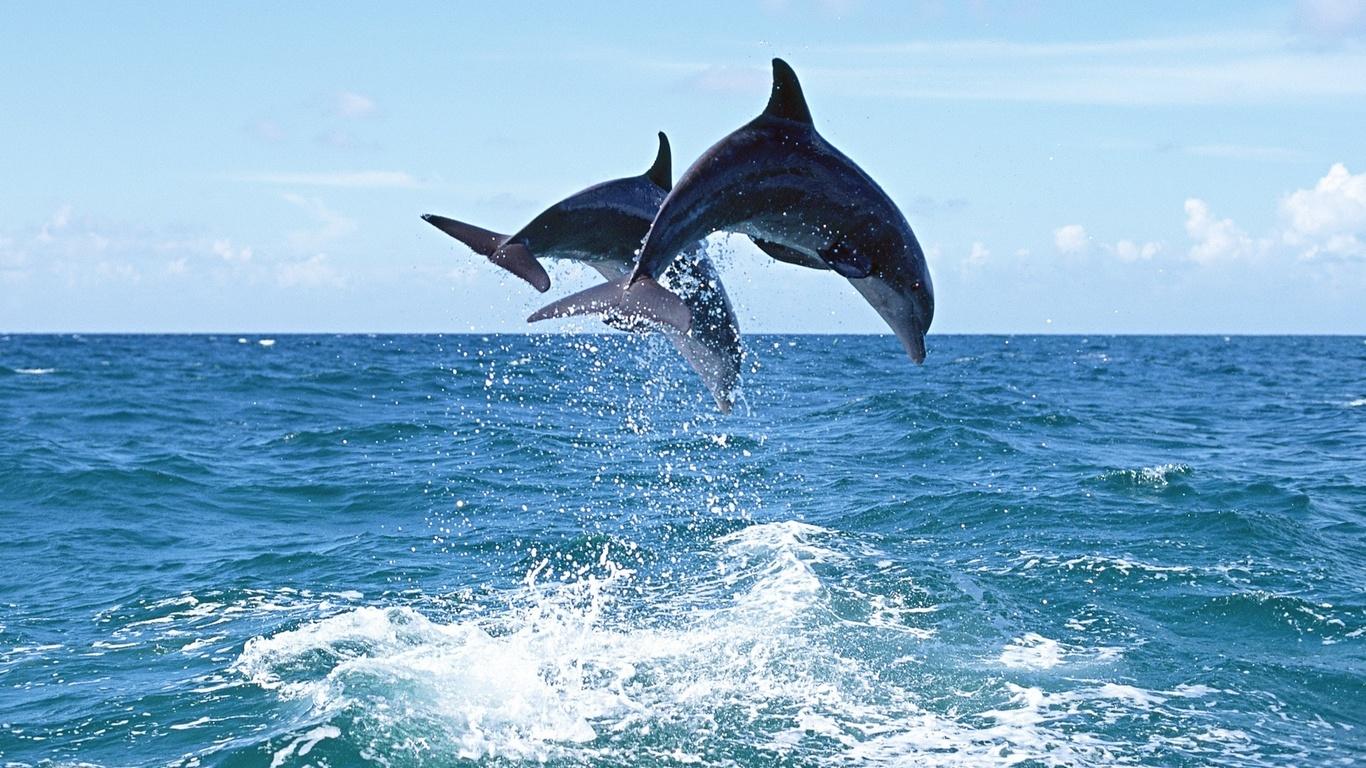 Картинки моря и дельфины