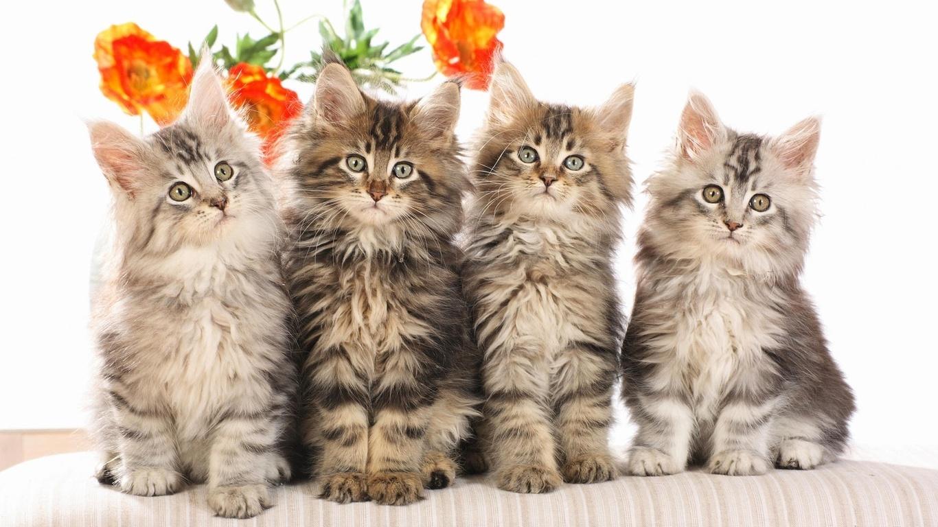 картинки с четырьмя котятами территории слк орион
