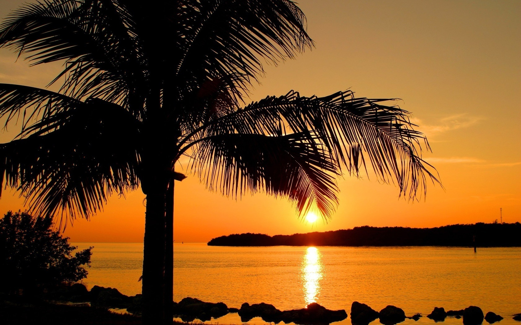 картинки с рассветом и пальмами продуктом, представленным