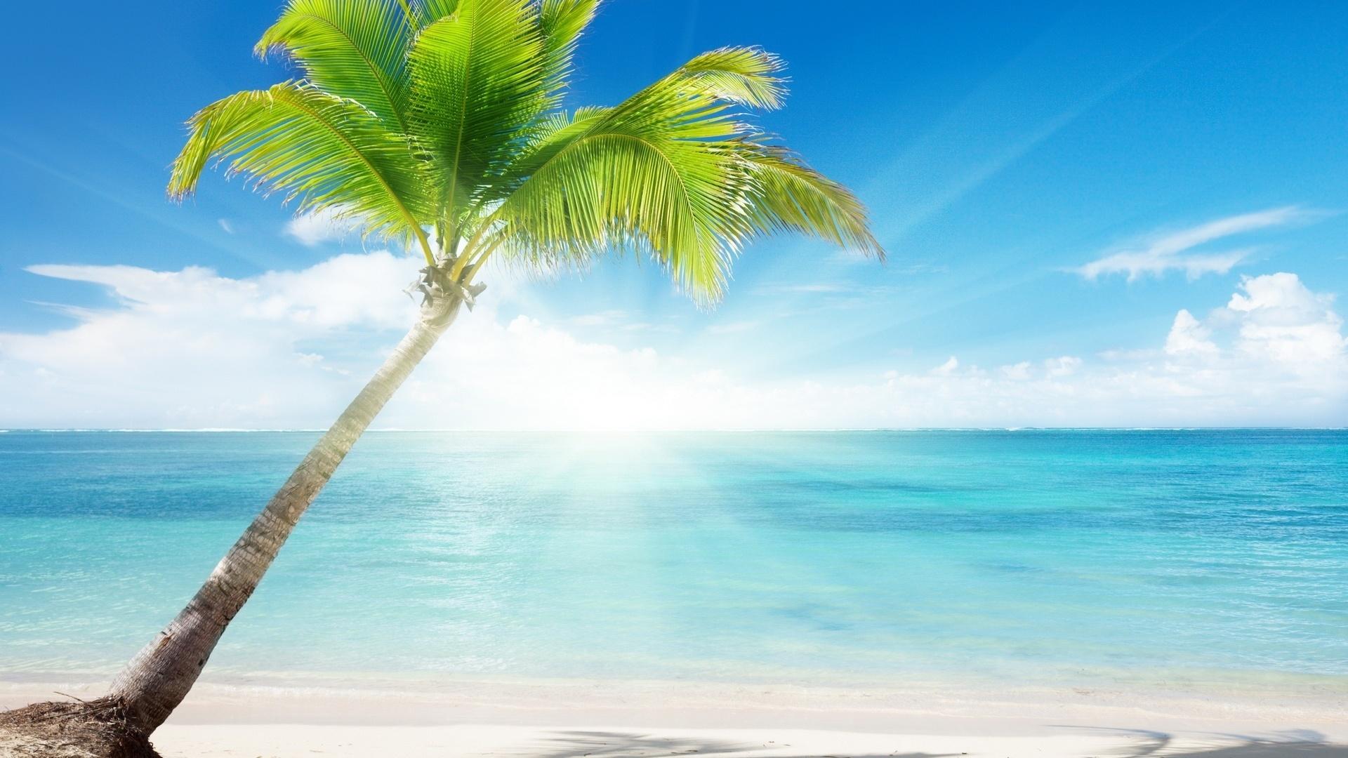 Картинки моря и пальм