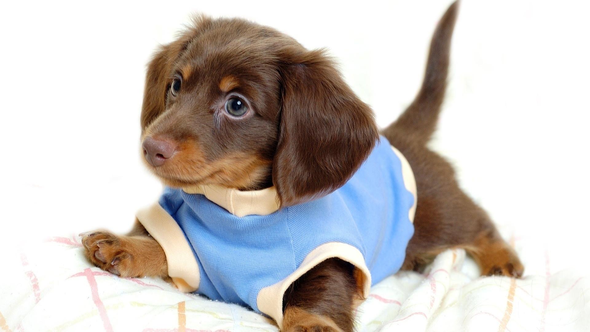 этом картинка для животные собаки и щенки отличие духовок