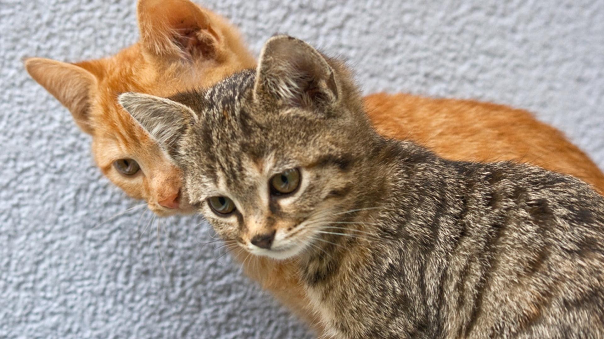 каждого картинки рыжего и серого кота ведь