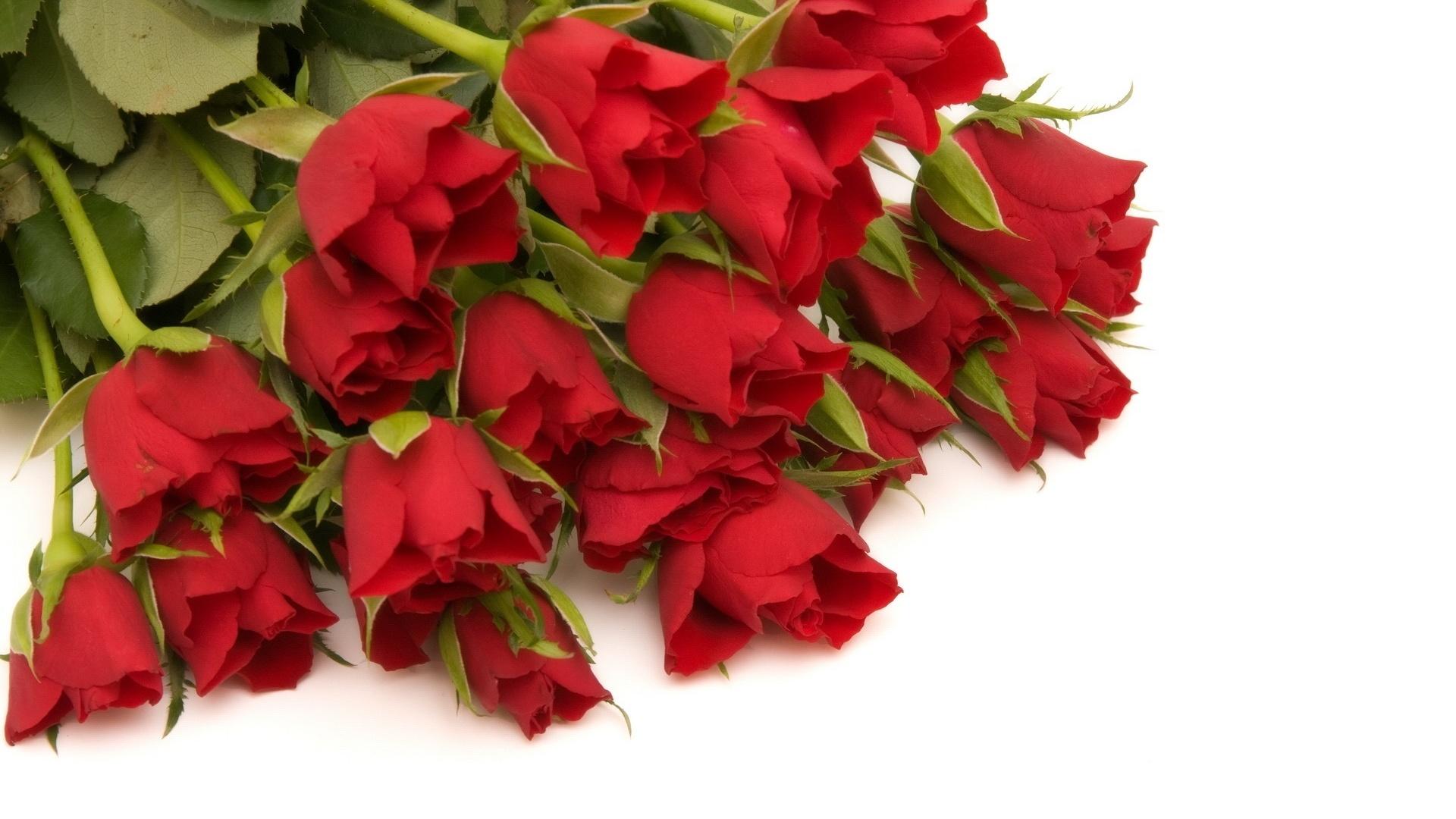 картинка шикарные розы на белом фоне тот момент