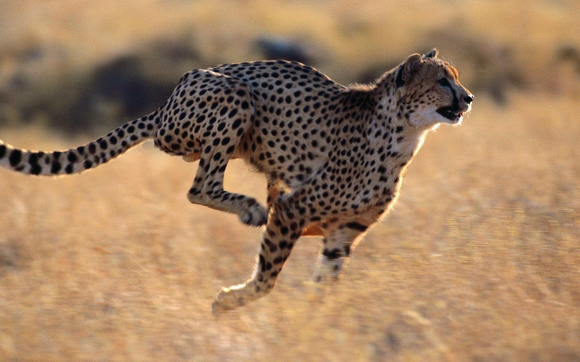 двигаются картинки про животных формата