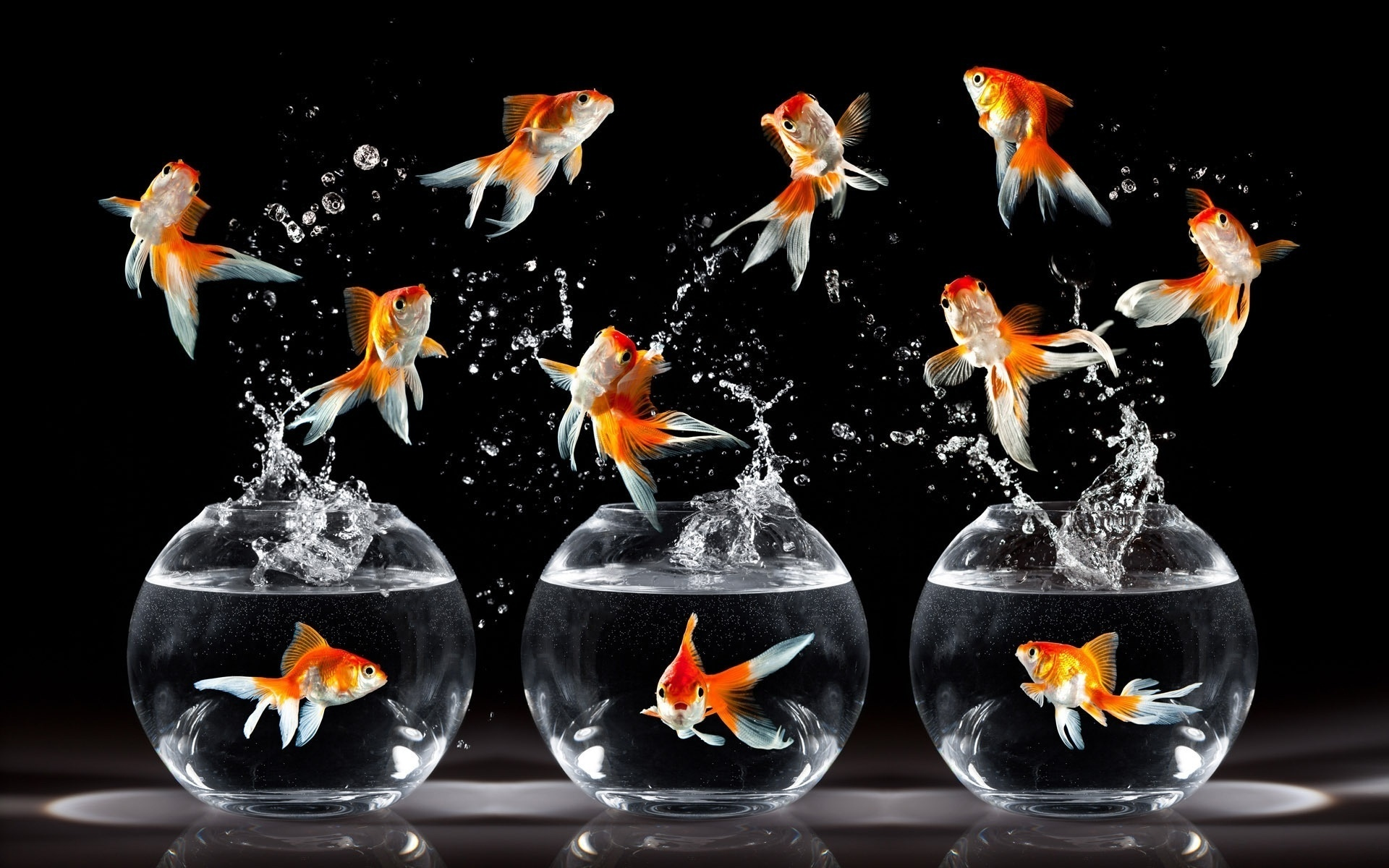 картинки для аквариума по фен шую прямоугольное изображение макете
