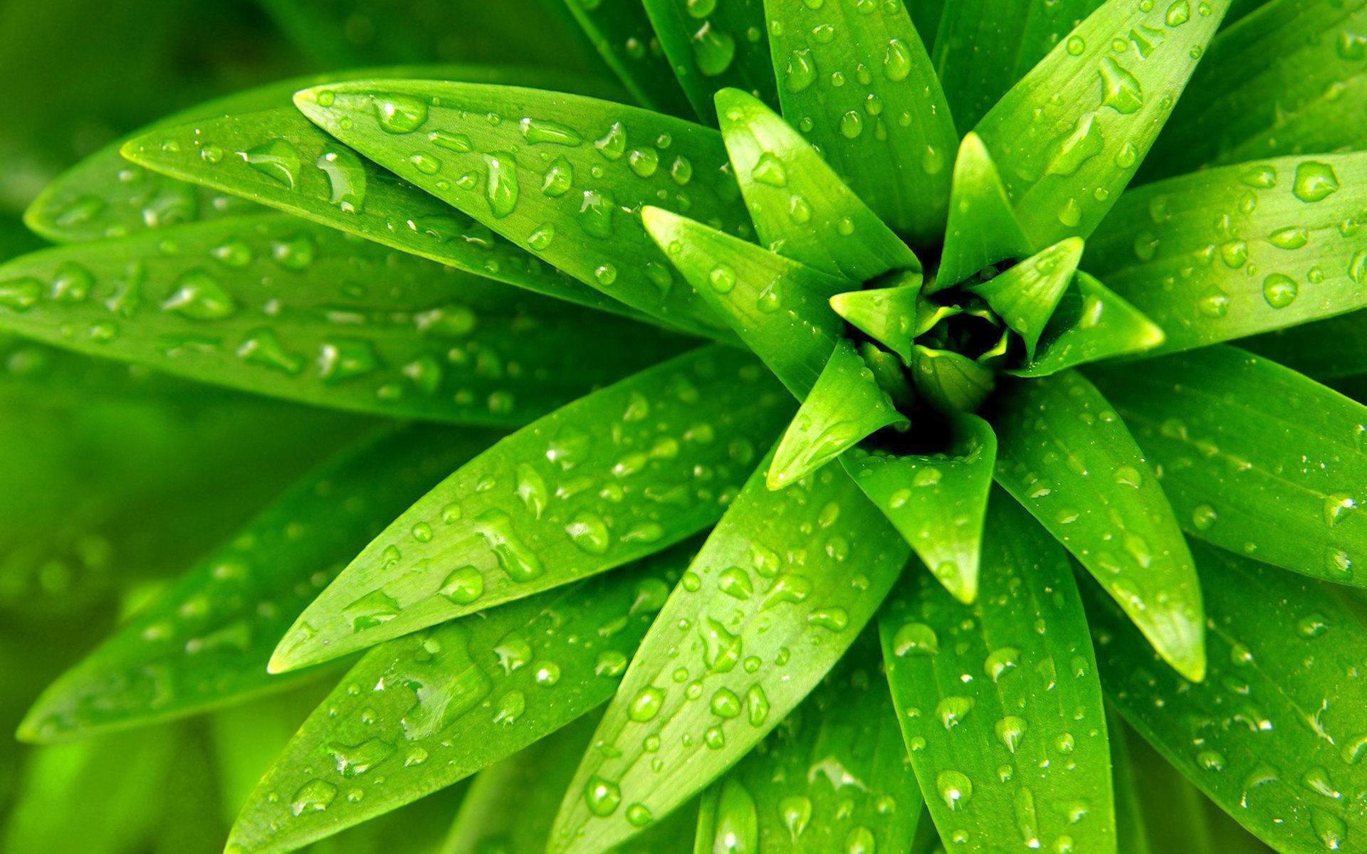 красивые зеленые фотки ближайшее время