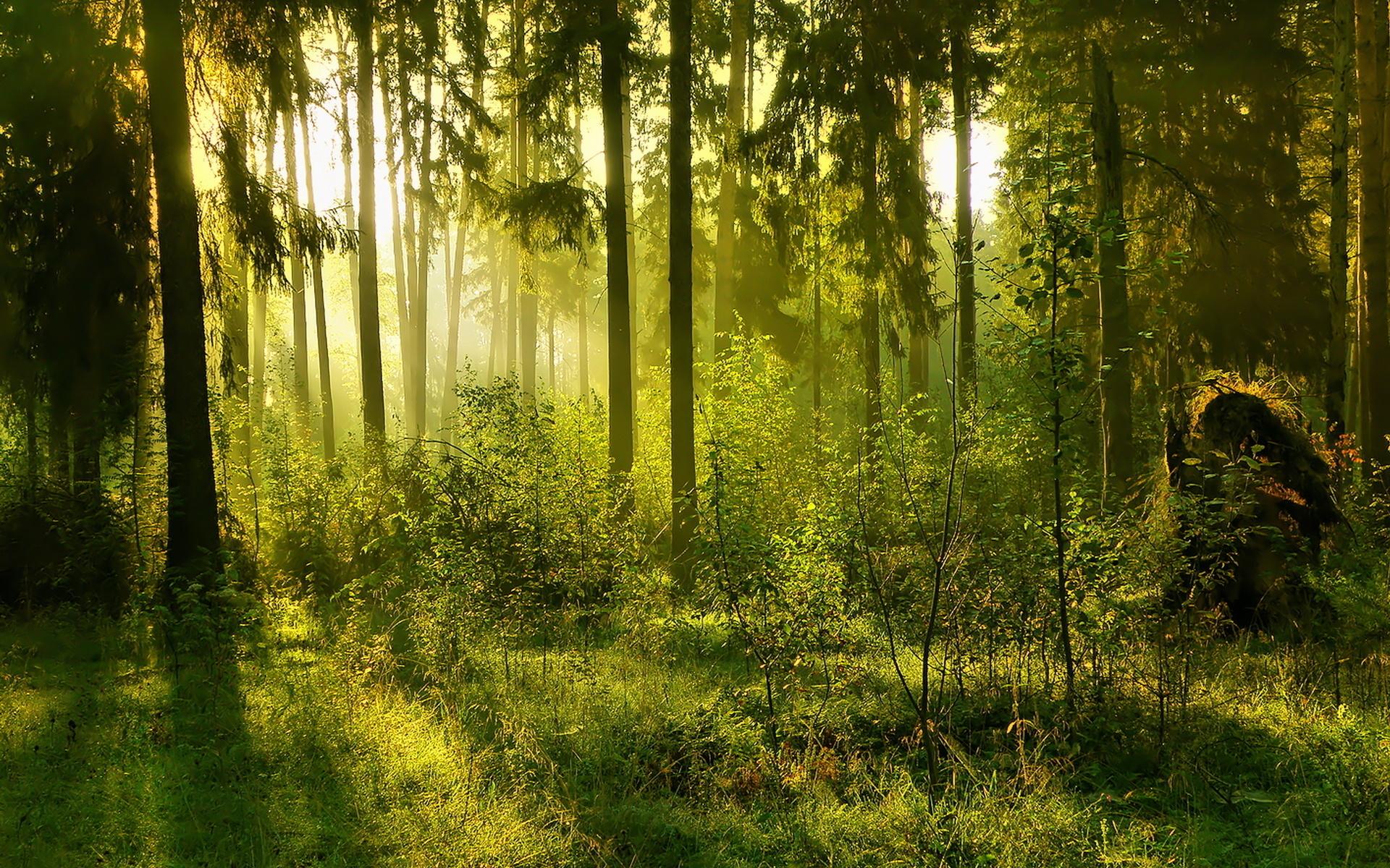 Картинки с изображениями леса