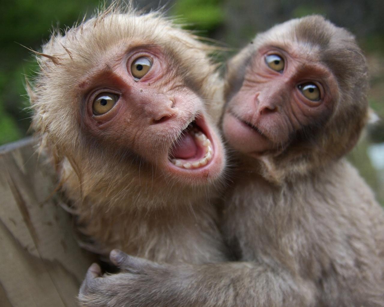 для картинки двух обезьян смешные стихов