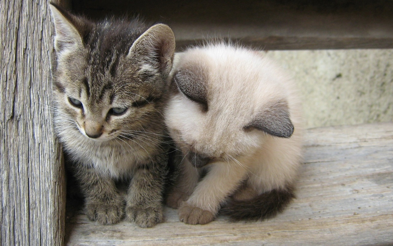 Картинки ты мой маленький котенок