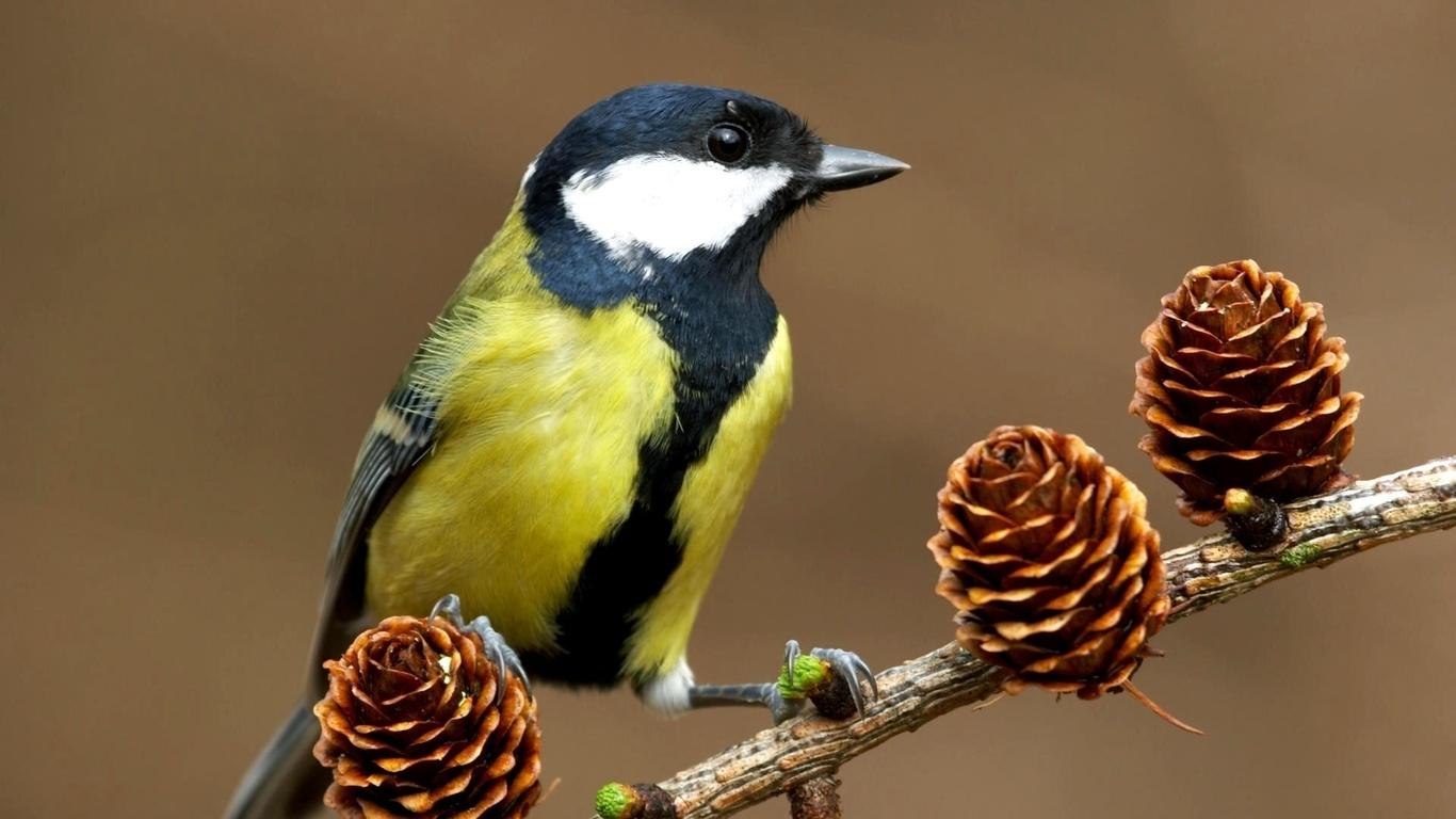 картинки с изображениями птиц
