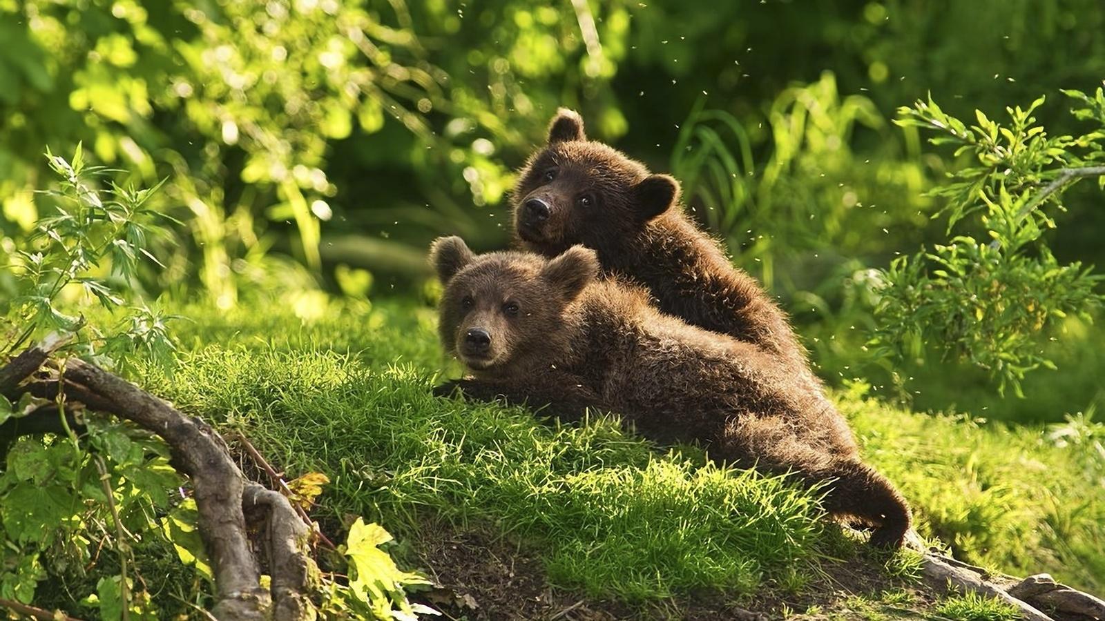 картинки медвежата в лесу с добрым утром проведу