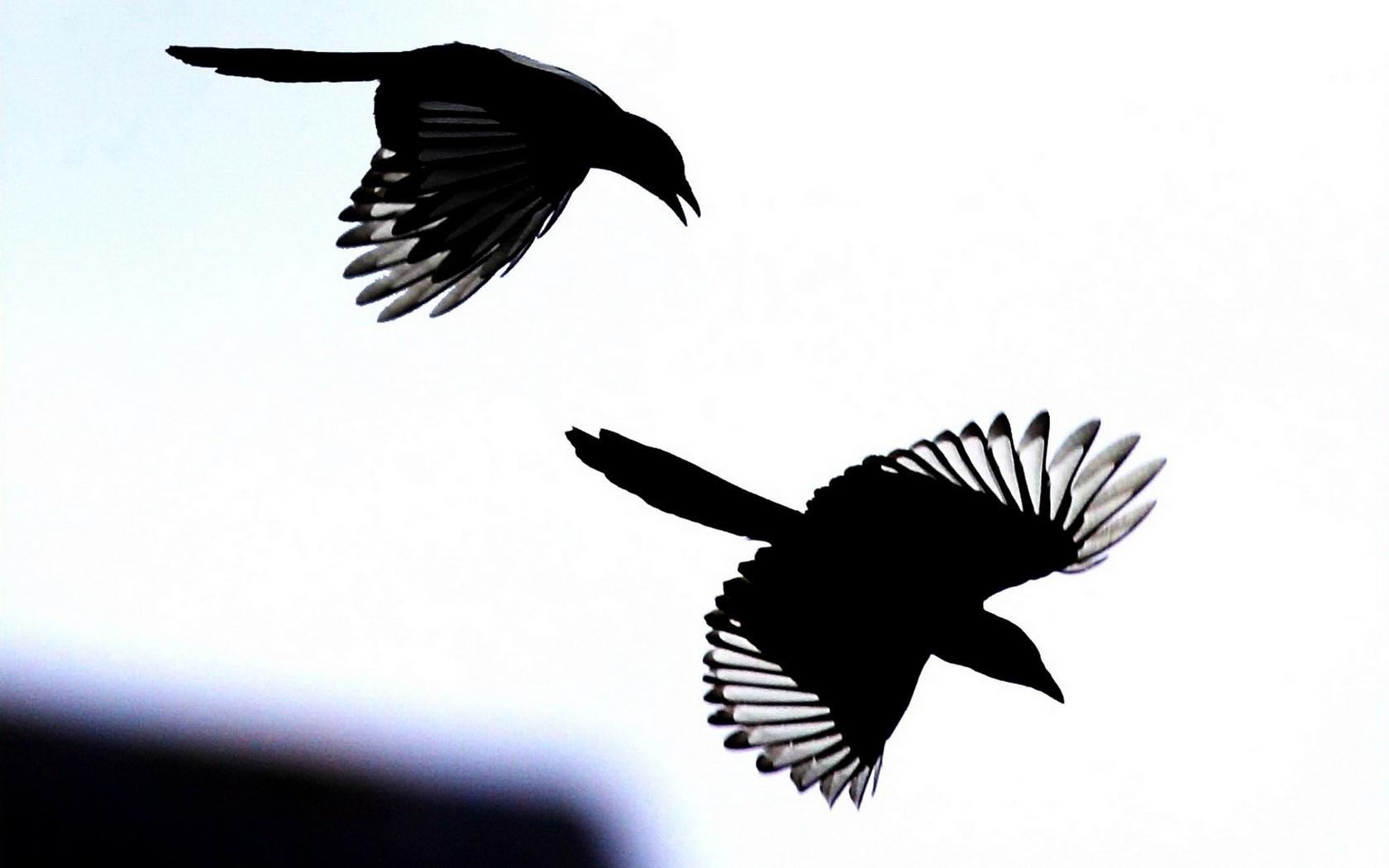 тень летящей птицы не движется всходят седьмой