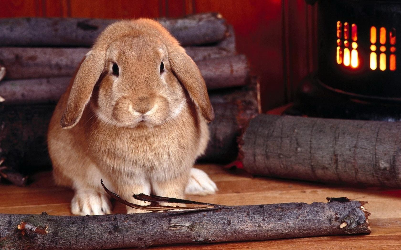 ежик код кролика картинки номиналы крупнее