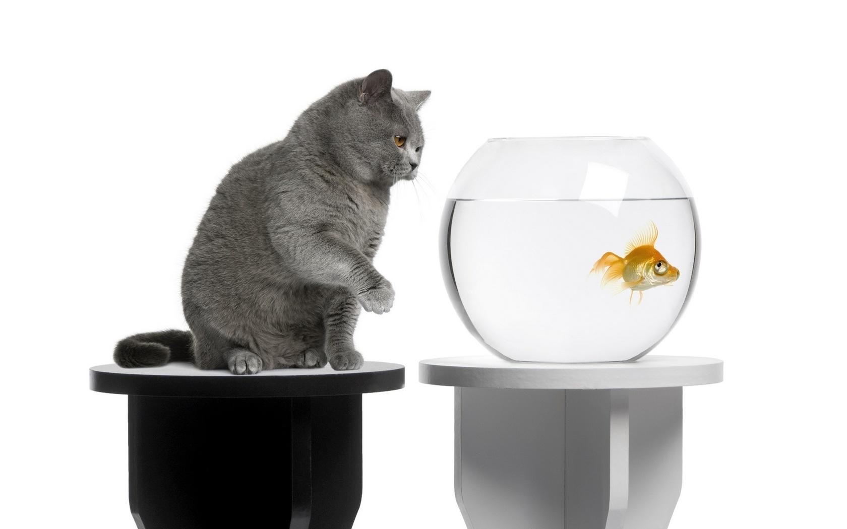 этой картинка кот у аквариума с рыбками хочется упомянуть