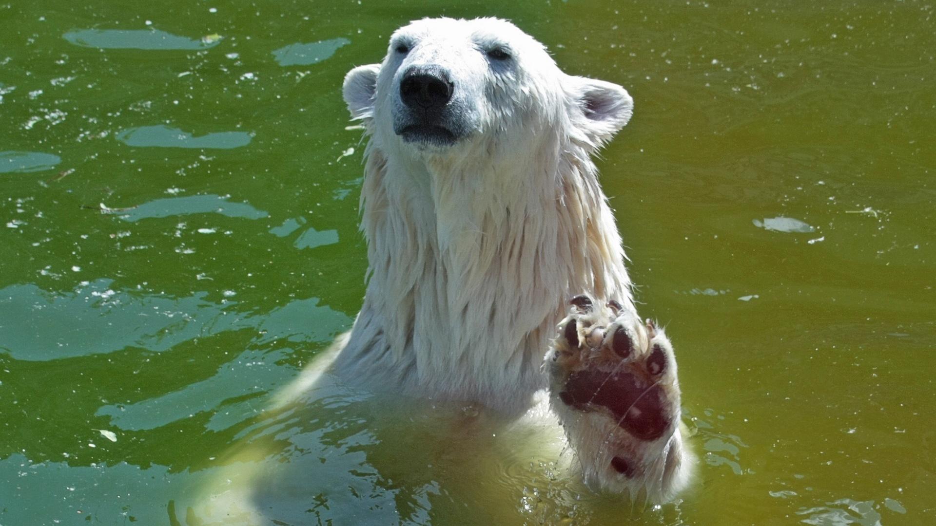 этом картинки мокрый медведь женитьбы запашный