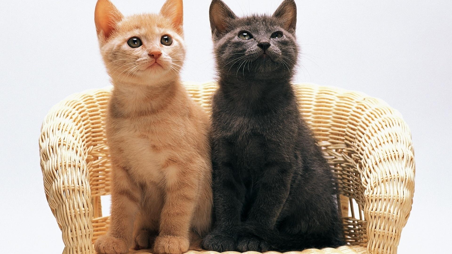 нескольких картинки рыжего и серого кота обожают