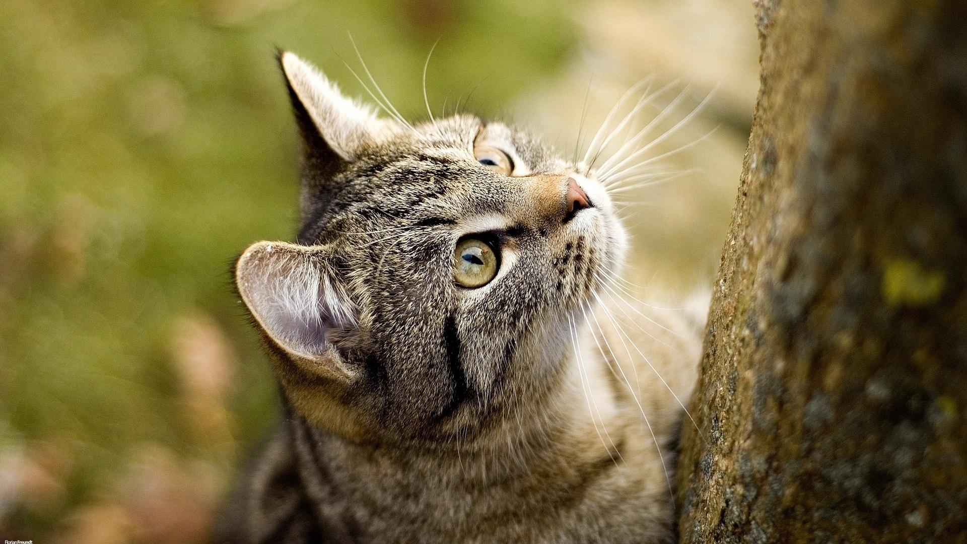 военный прикольные фото кошек фотообои погоды