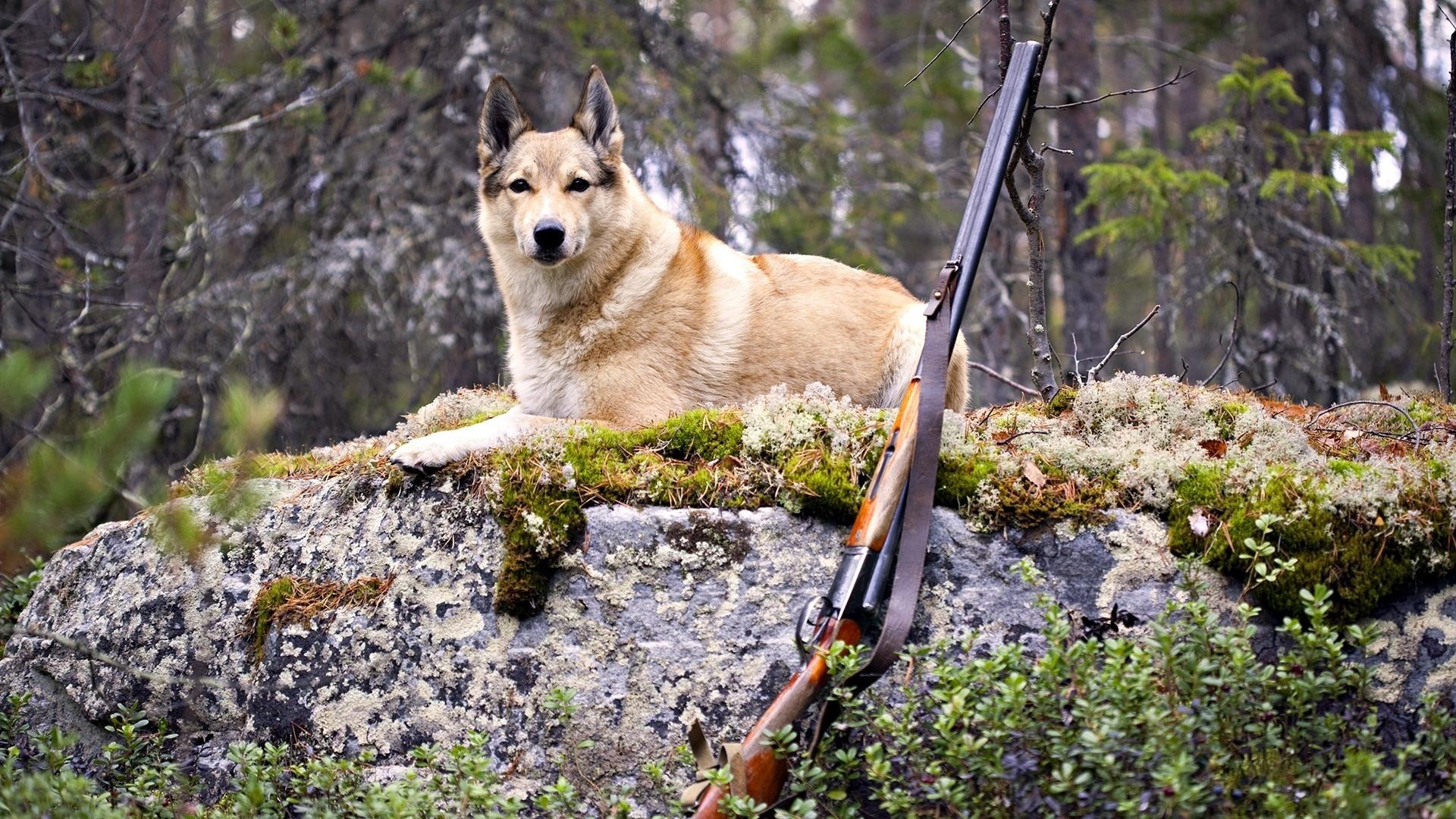 фотобутафории картинки высшего охотника волком
