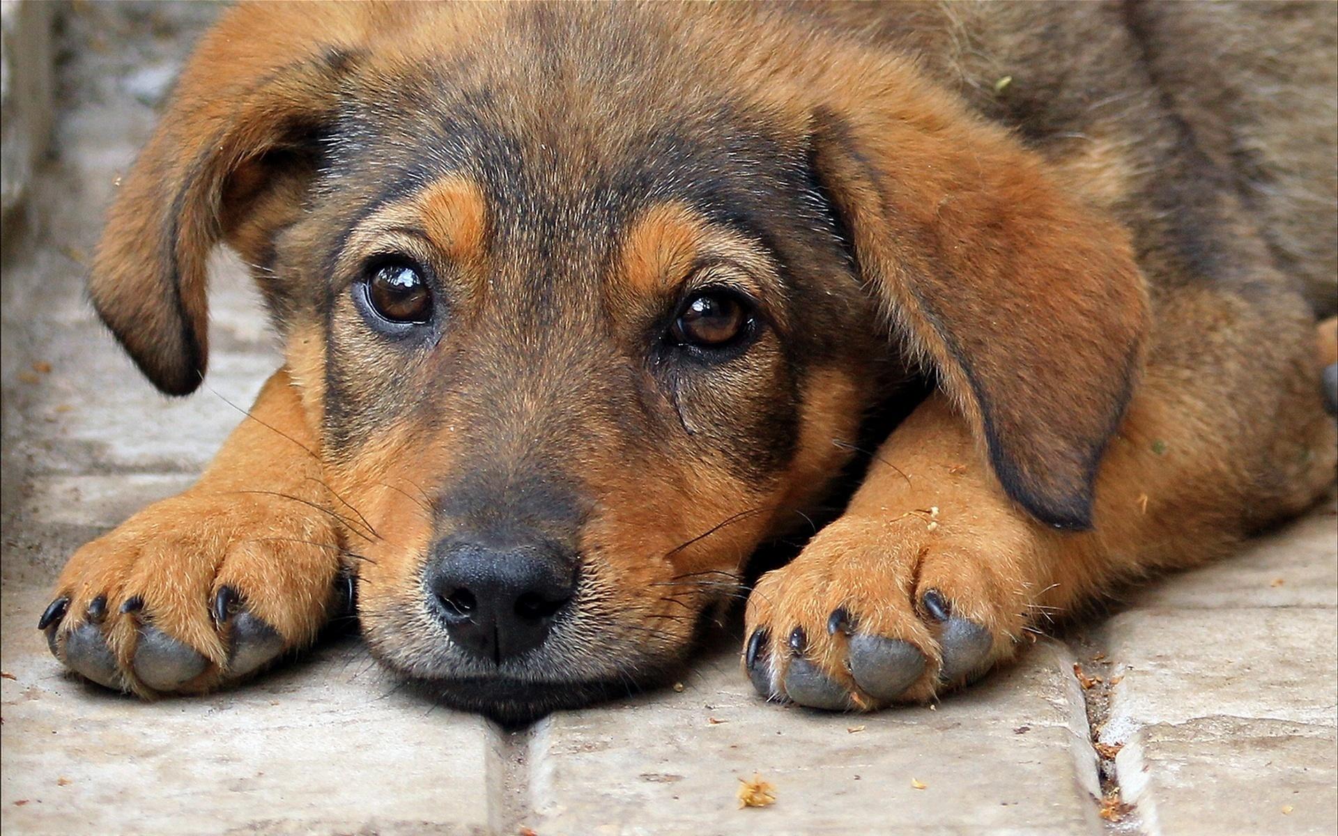 картинки бездомного щенка удивительное