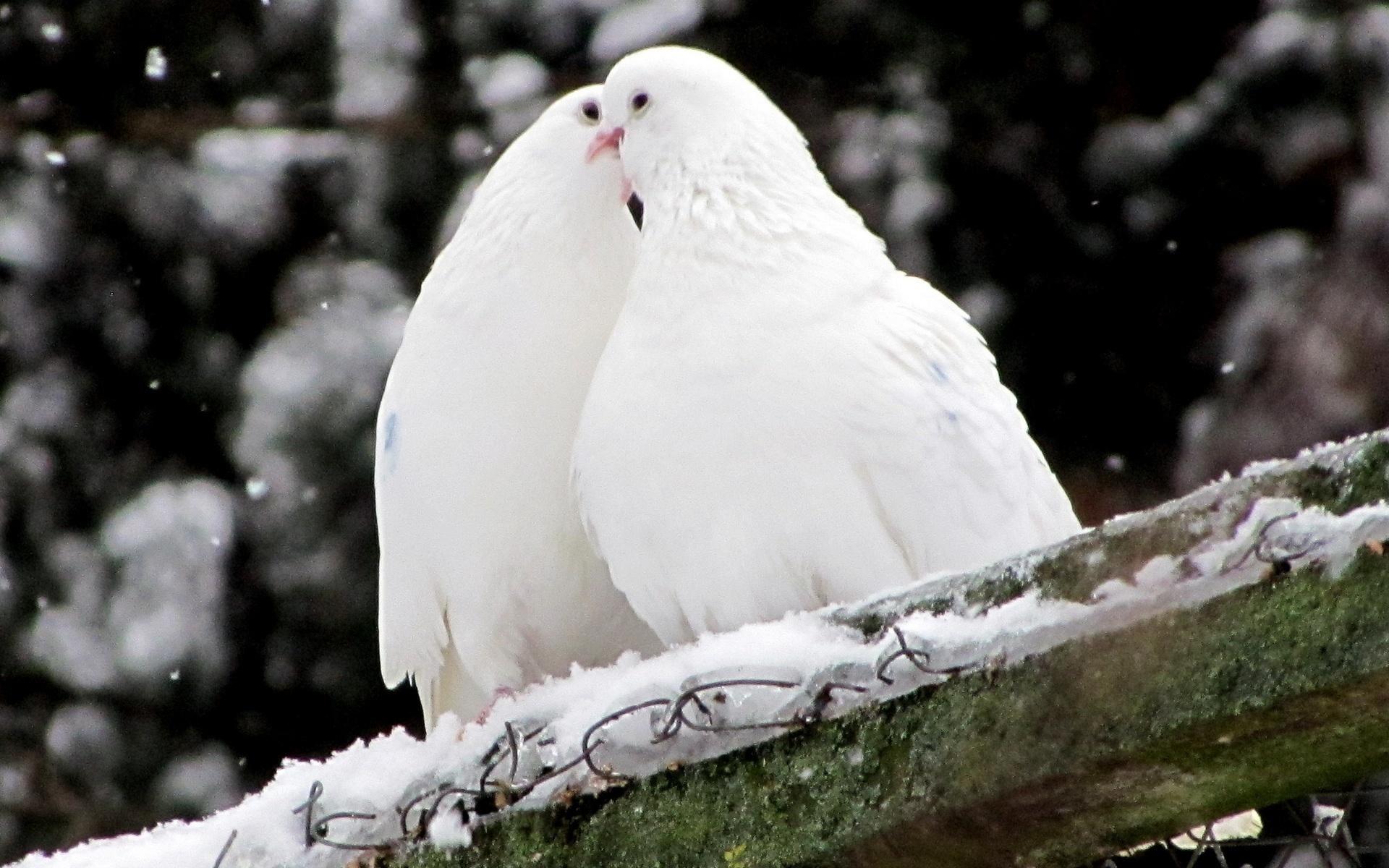 расположен белая птица любви картинки вспышек фотоаппаратов портятся