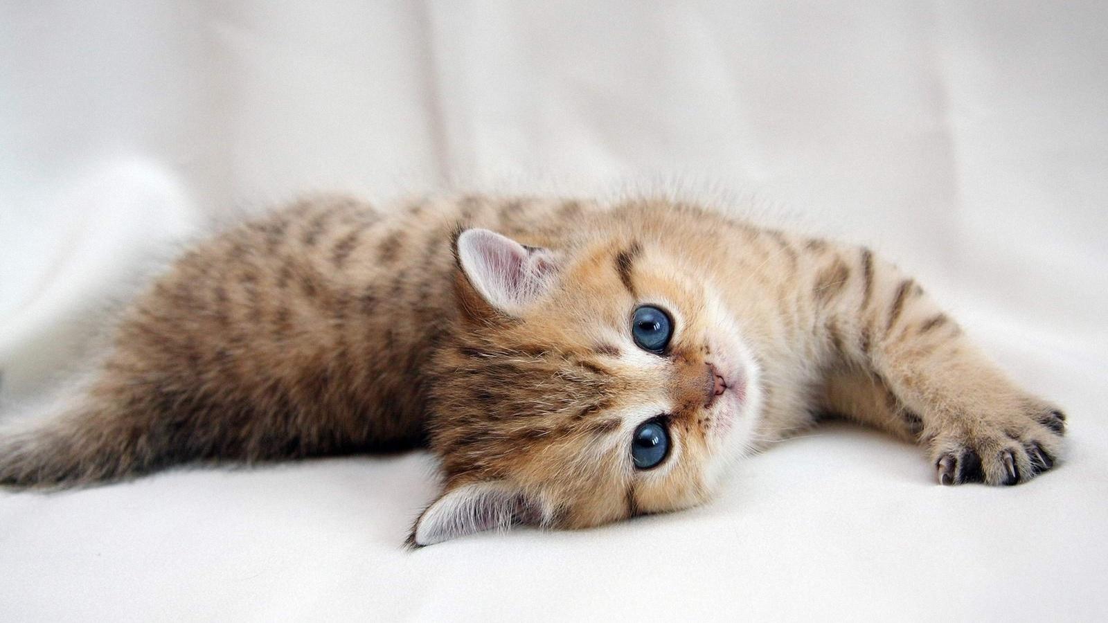 Котенка красивая картинки