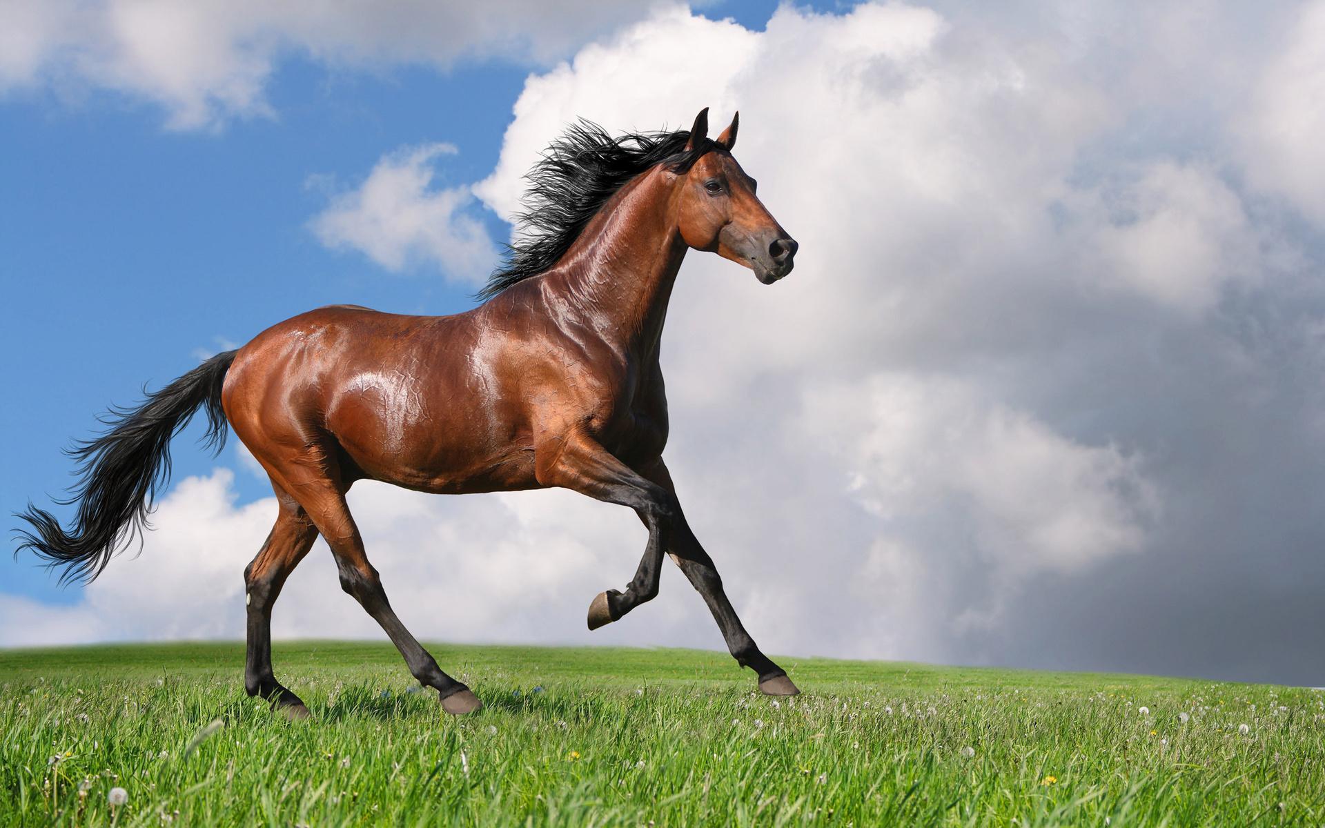 картинки с разными лошадьми только