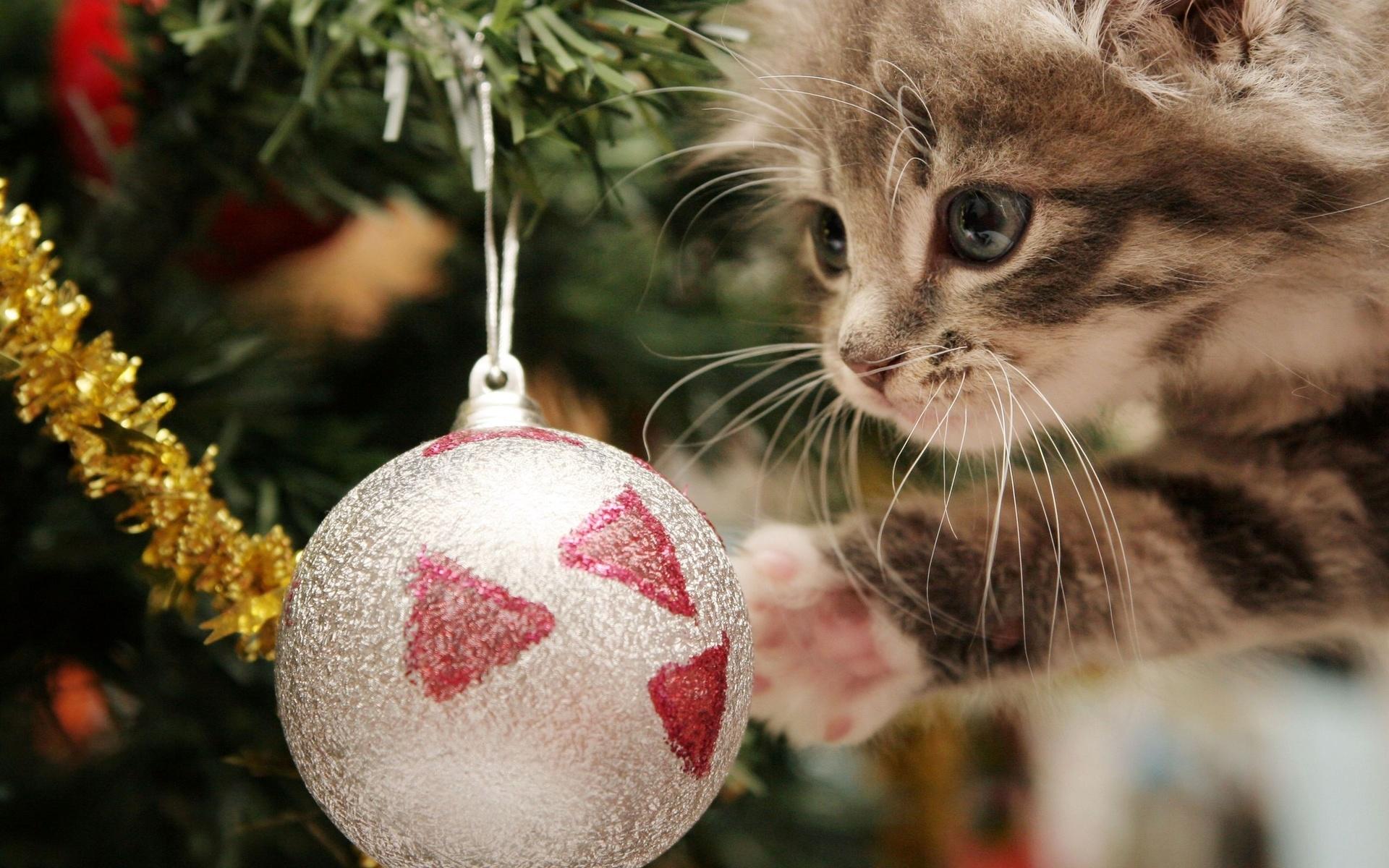 поиск картинки про новый год