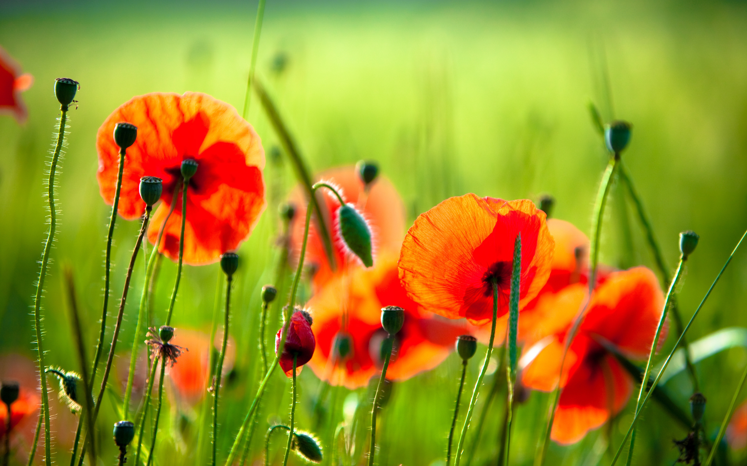 Картинки на телефон красивые цветы и природа