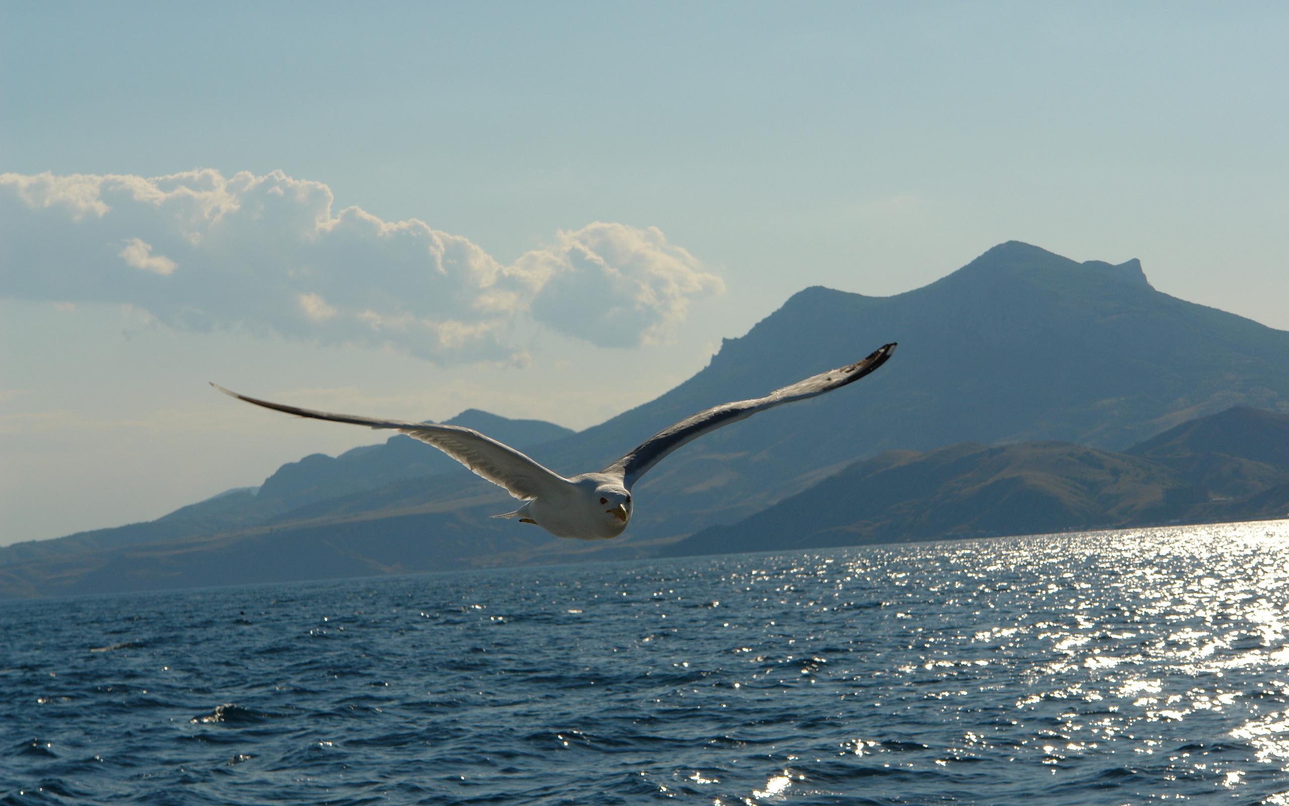 природа картинки чайки