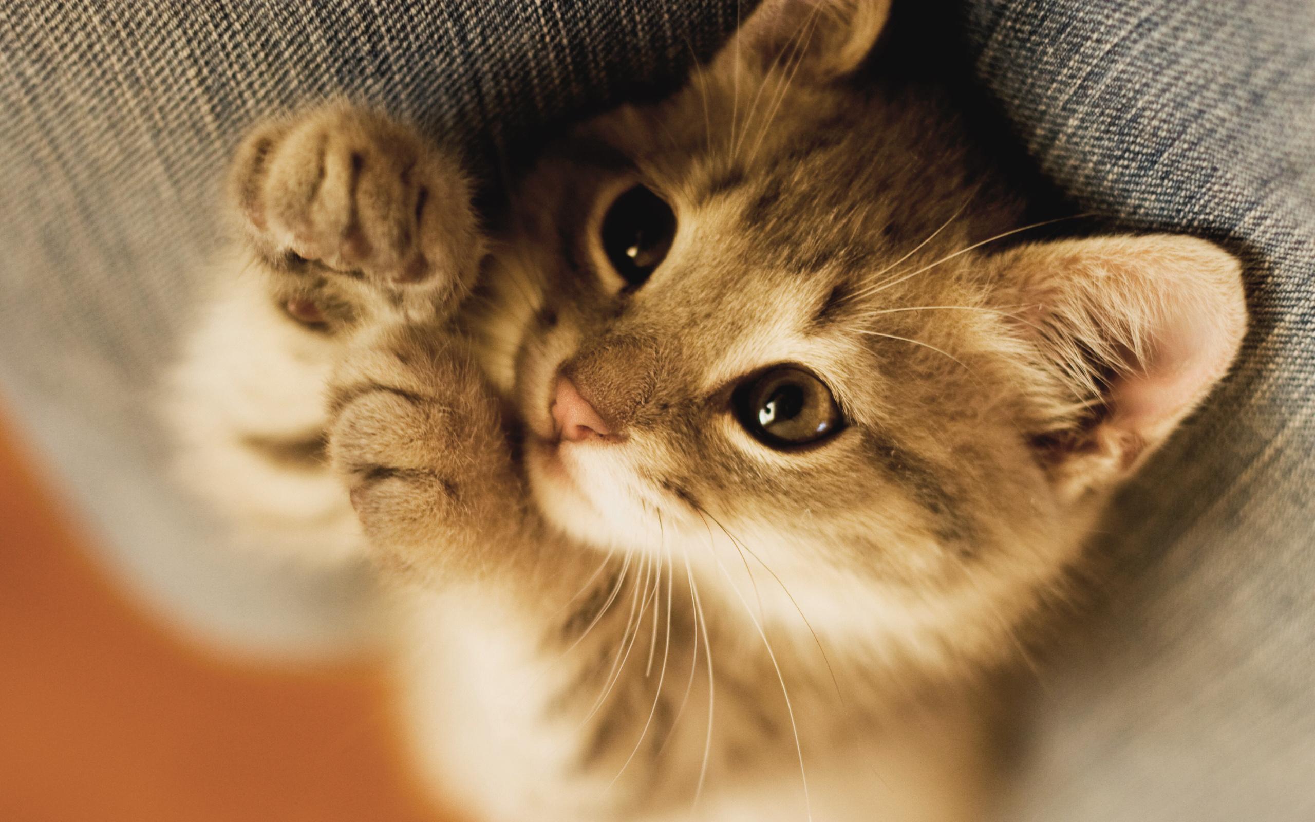 приятную картинки для планшета про котят завершил