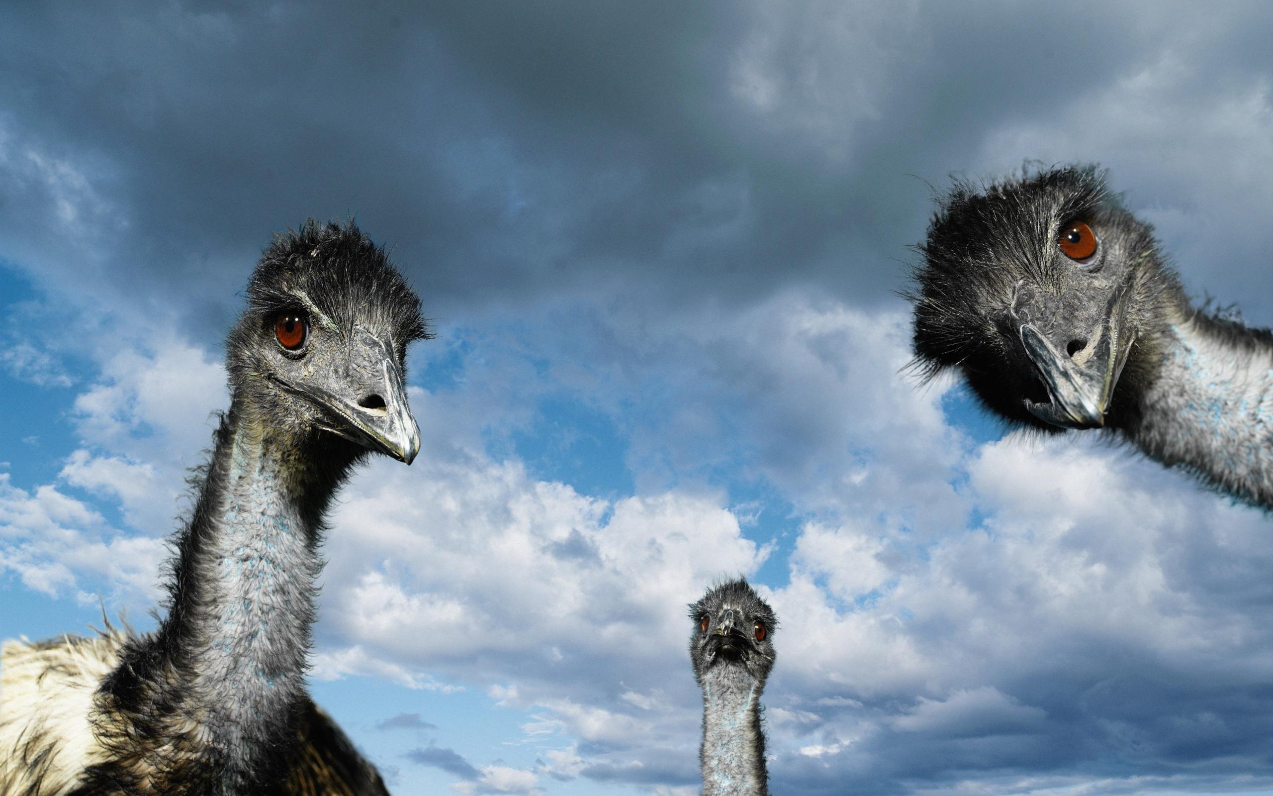 мотокроссом страус пингвин картинки что