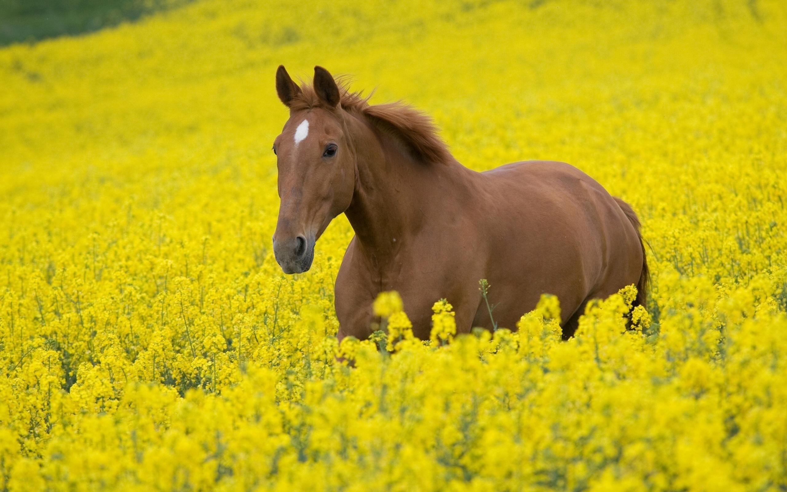 Красивые картинки с природой и животными, картинки начальника штаба