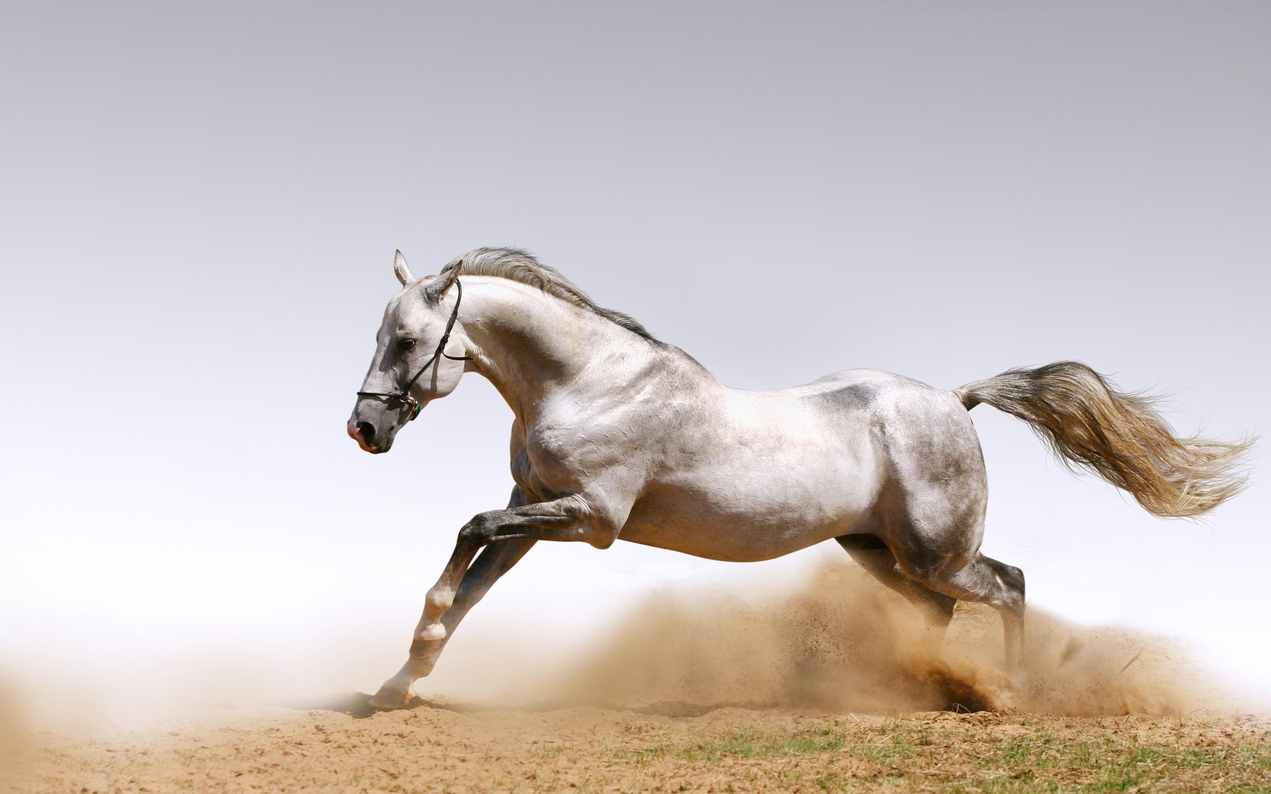 Лошади картинки, открытки февраля женщинам