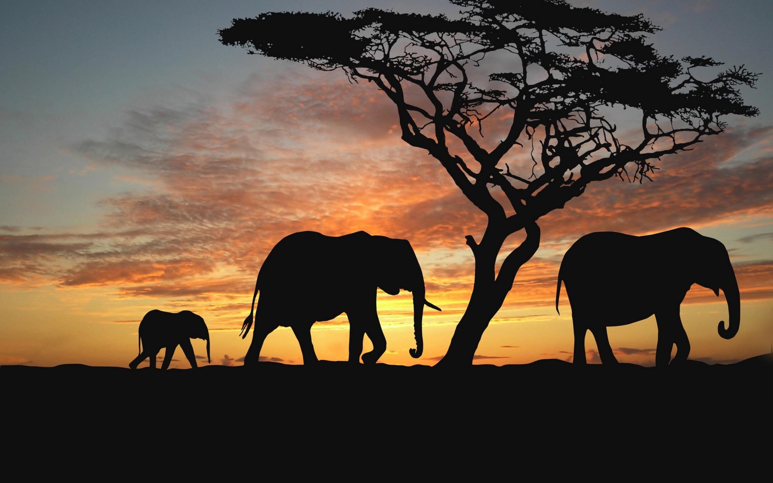 нашей африканские пейзажи картинки зима находится границе