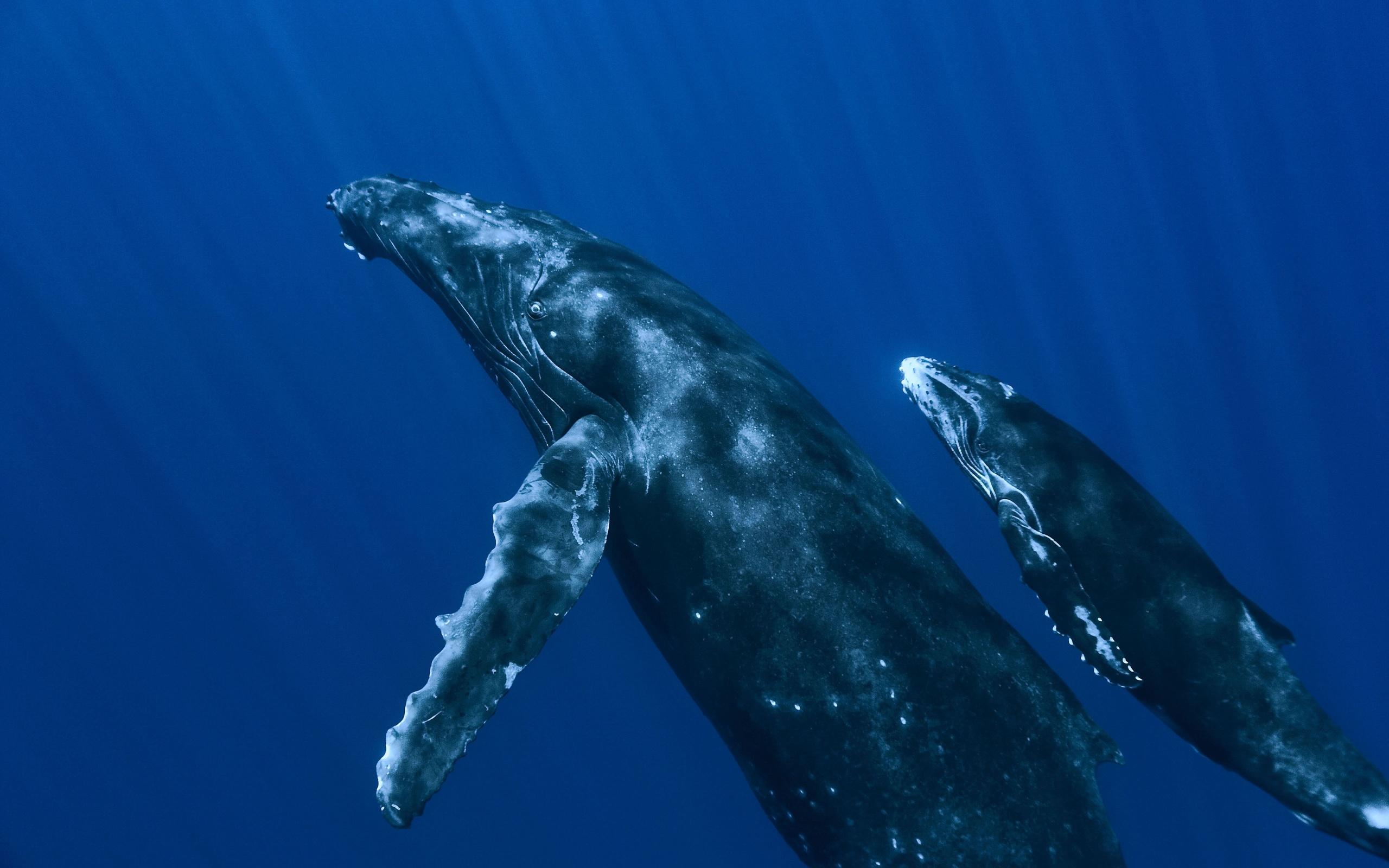 склада все о китах смотреть картинки самыми