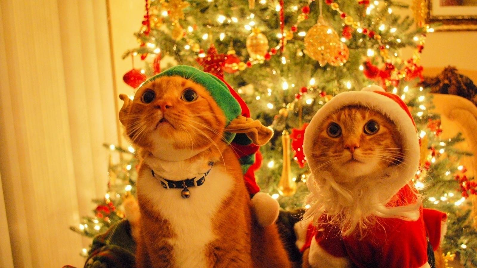 Счастливые картинки про новый год