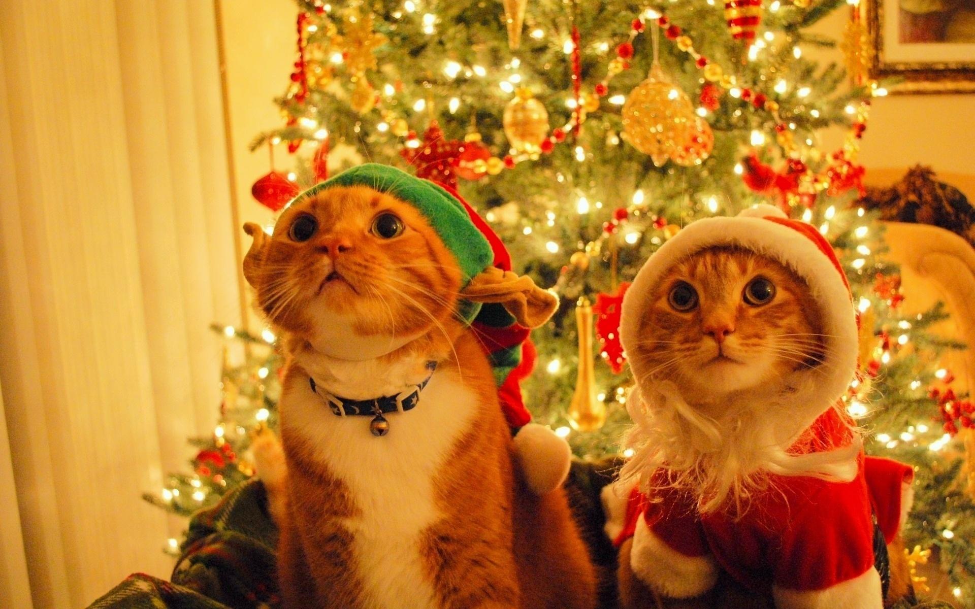 Картинки, картинки смешные новогодние коты