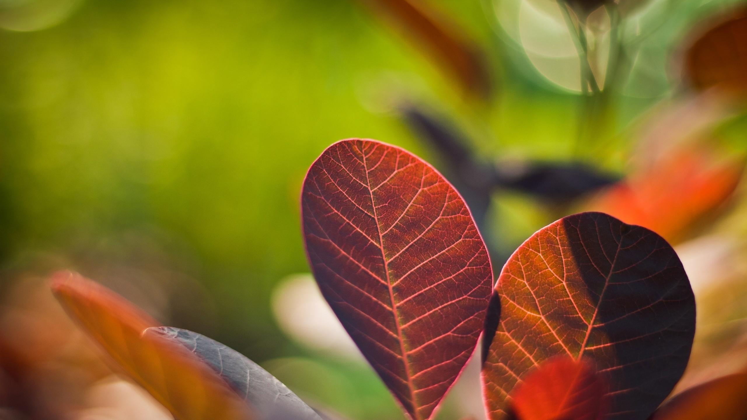 макро фото листьев времени