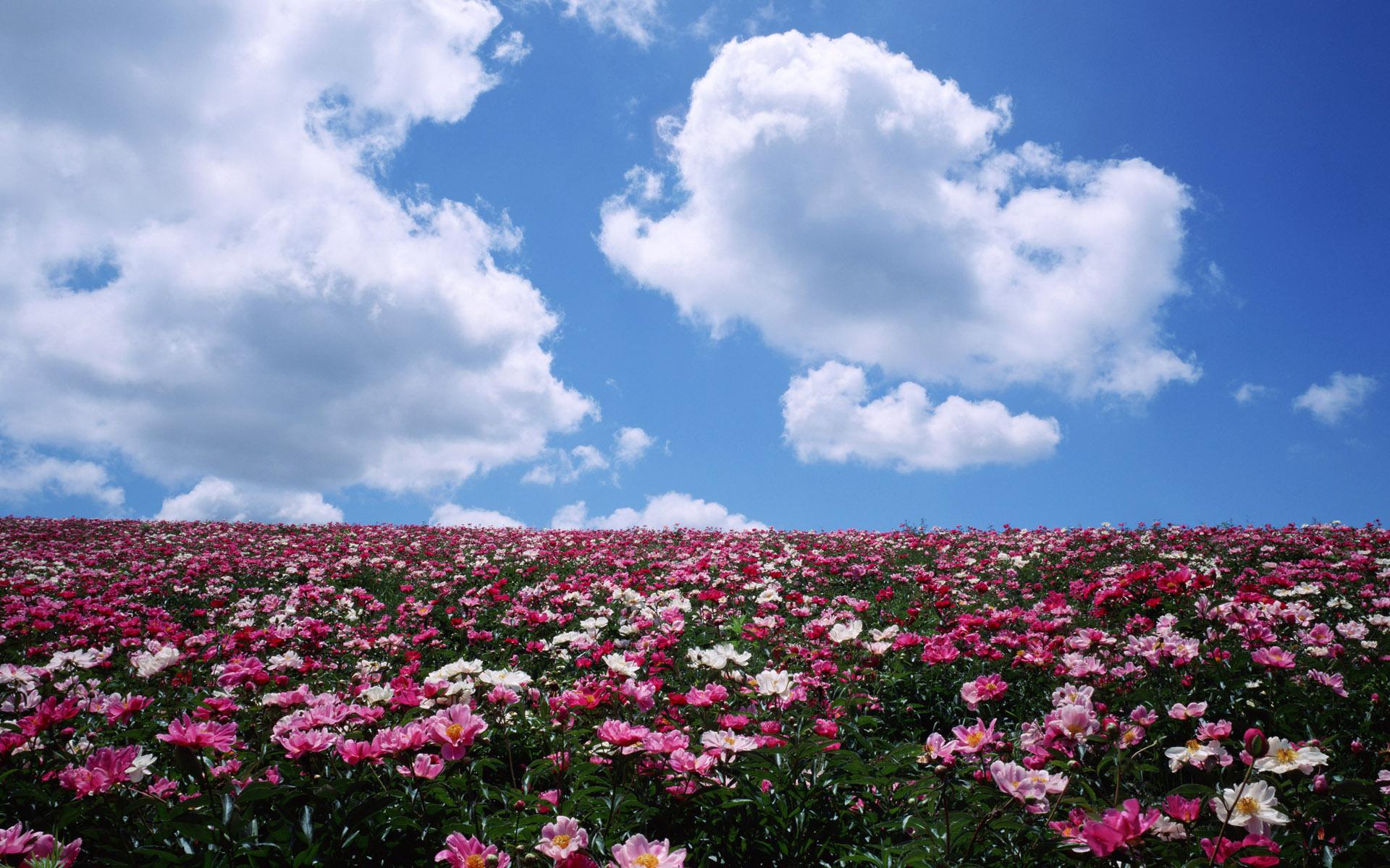Картинки с цветочными полями