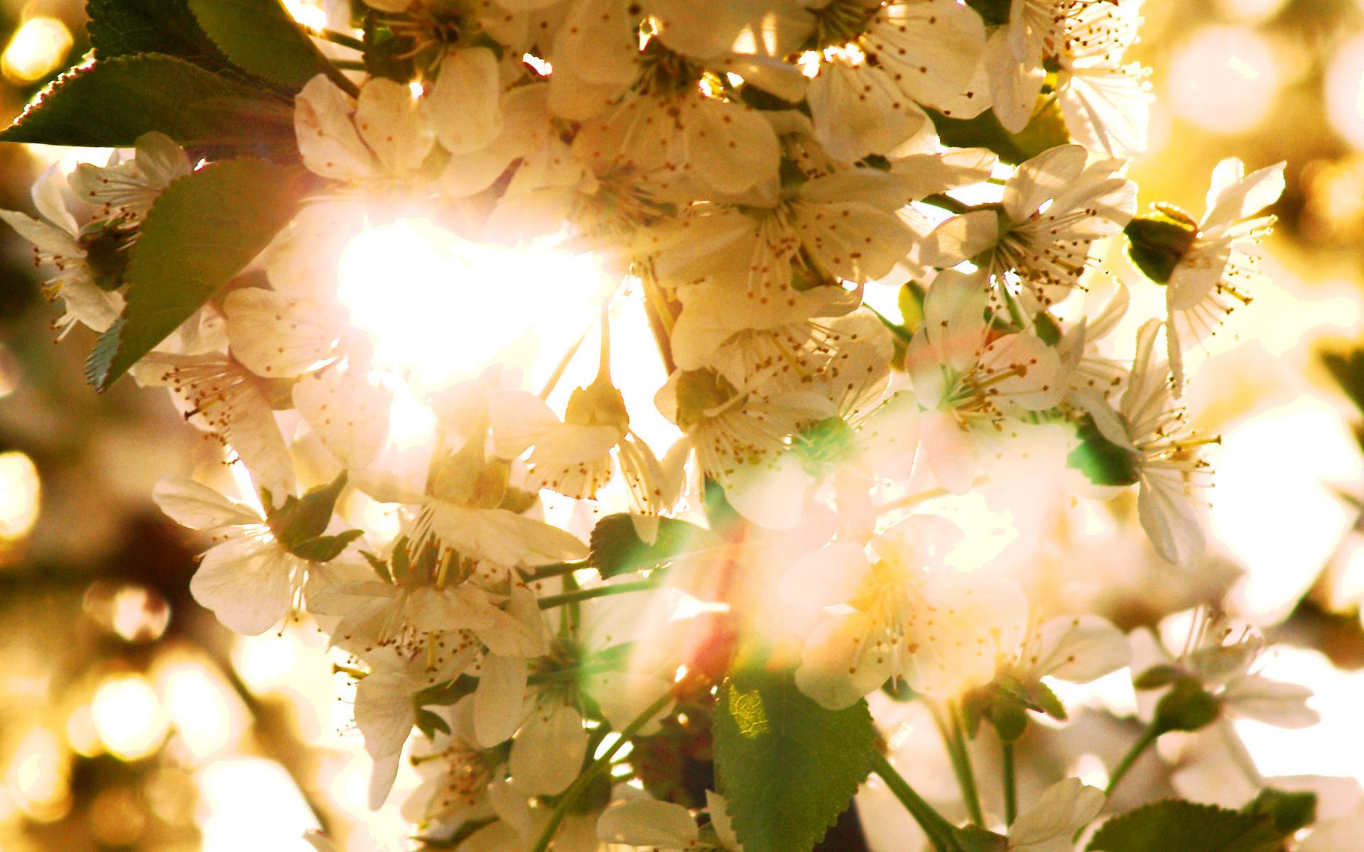 Картинки весна утро красота время процедуры
