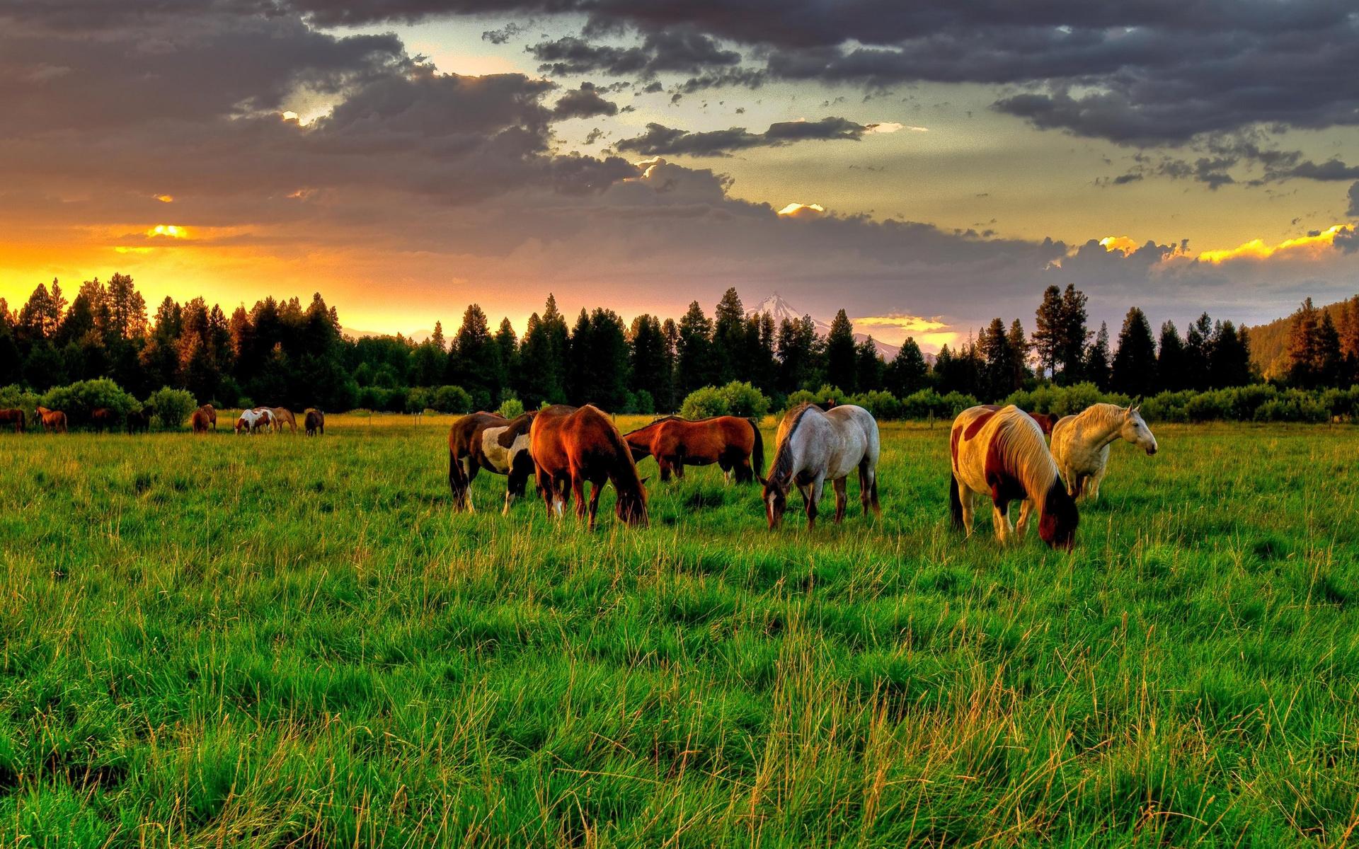 вовремя картинка лошади на лугу них есть