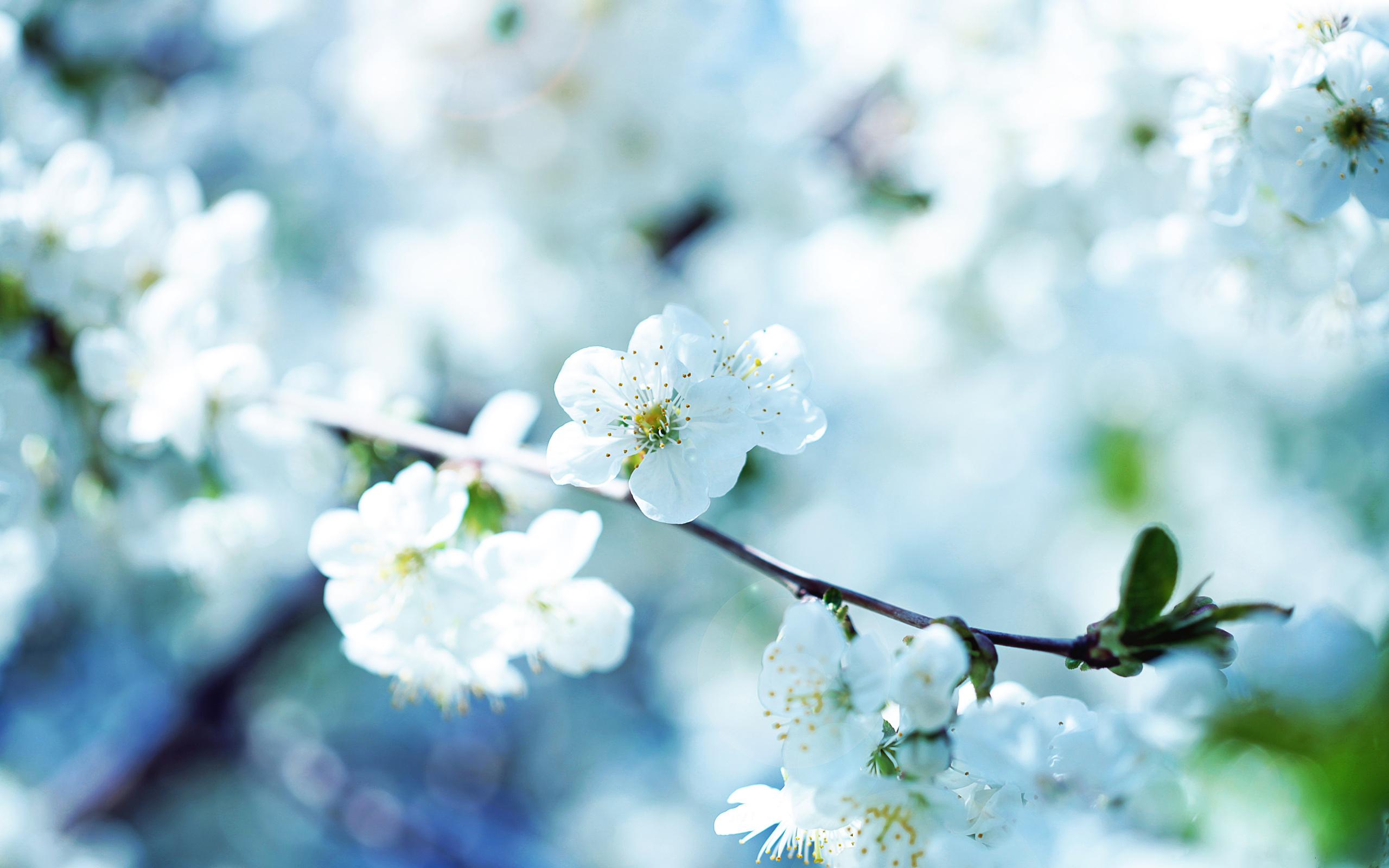 фото обложки для фейсбука весенние цветы