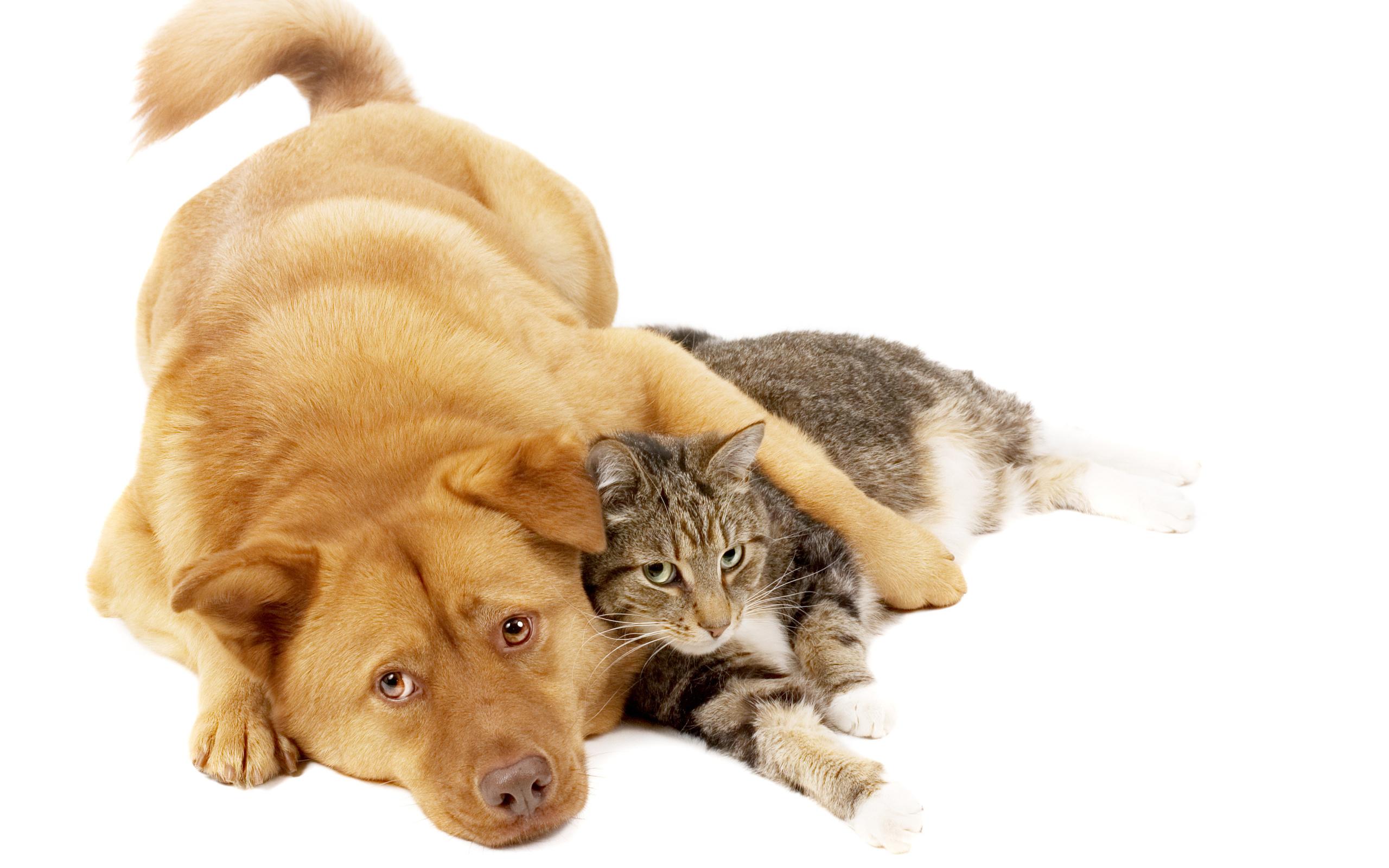 Фаниса открытка, прикольные картинки коты собаки
