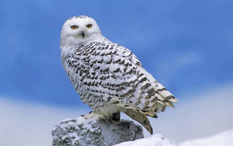 Картинки животные и птицы севера, гражданской обороны картинки