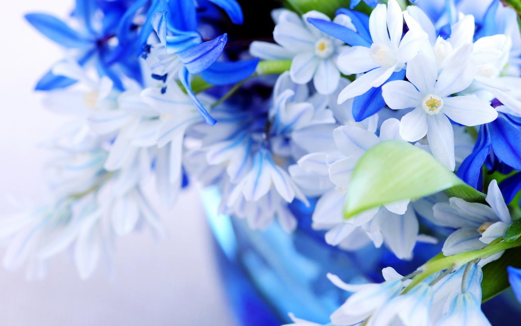голубые картинки на мой мир людям