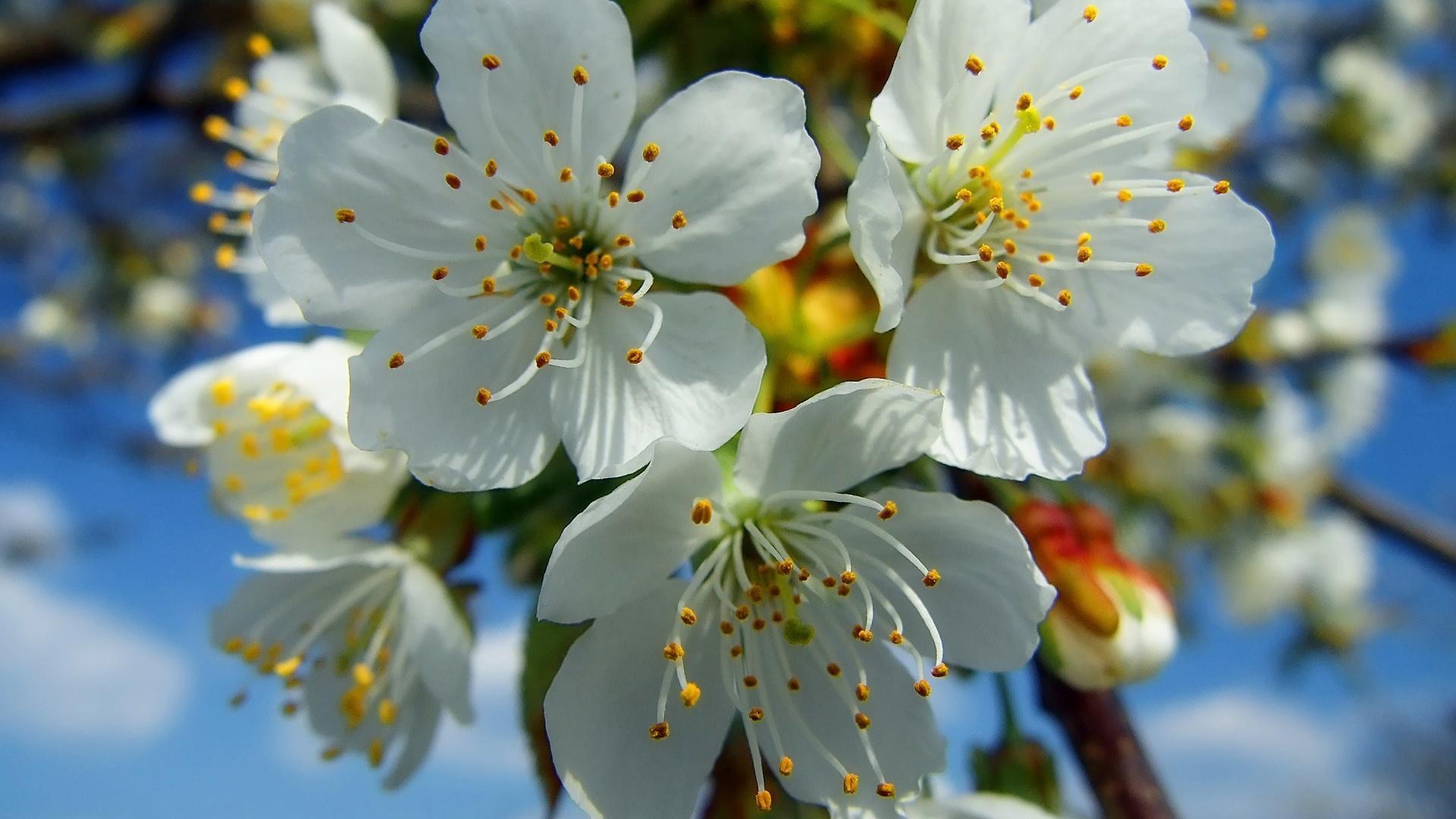 смотреть картинки про весну тип