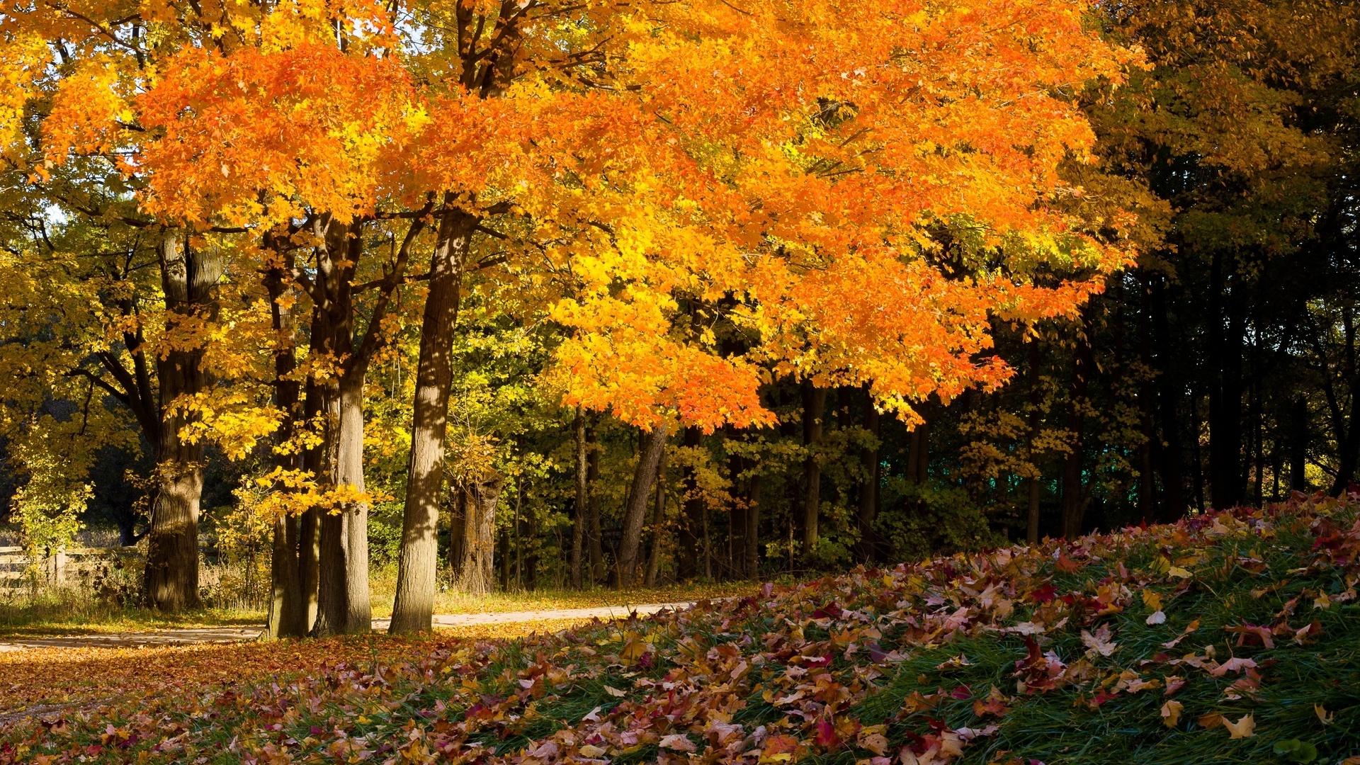 картинки про осень большие своего