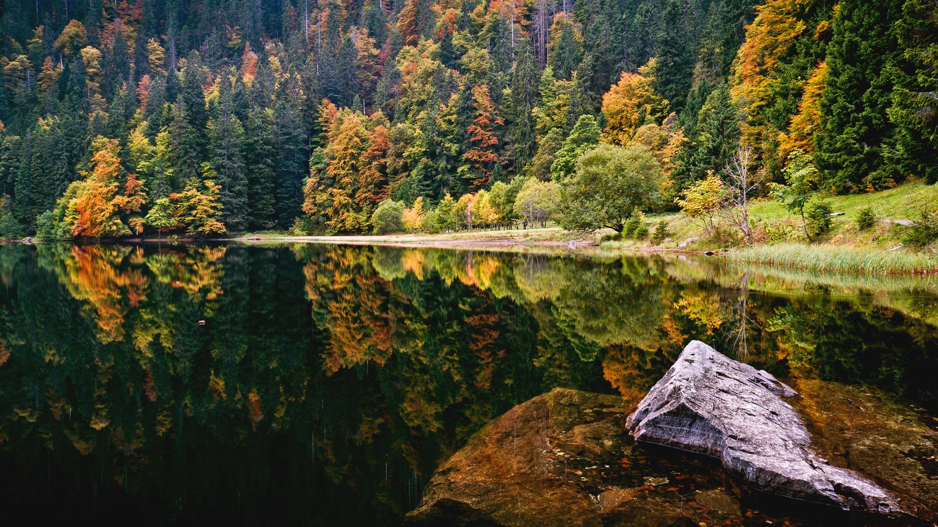 Картинки природы лес на рабочий стол