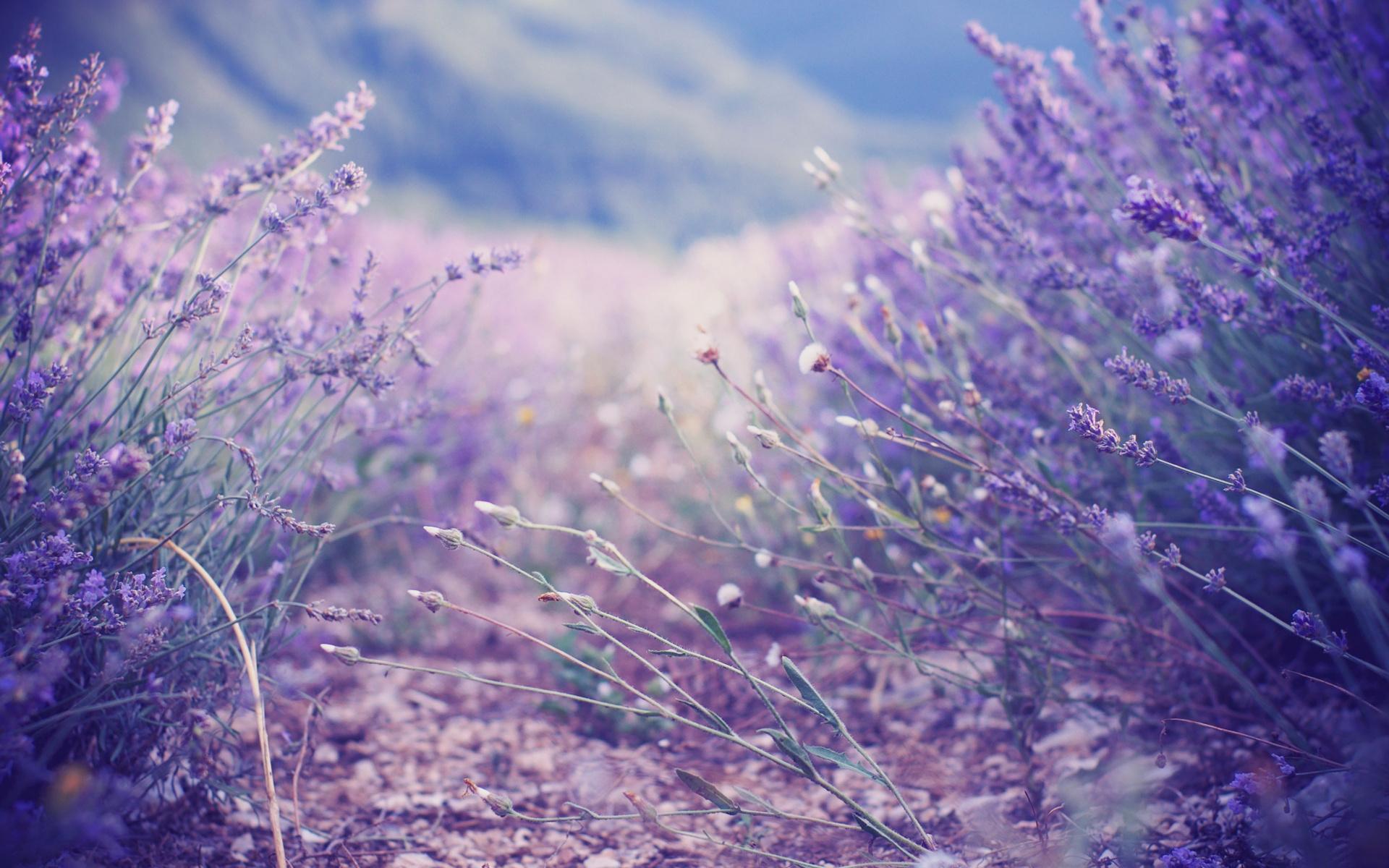 Нежно фиолетовый цвет картинки