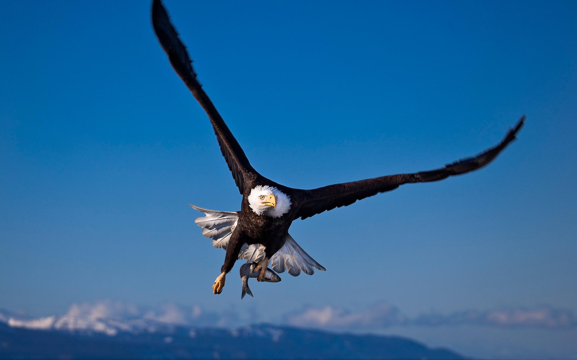 Кормушки для птиц все фото моменту гибели